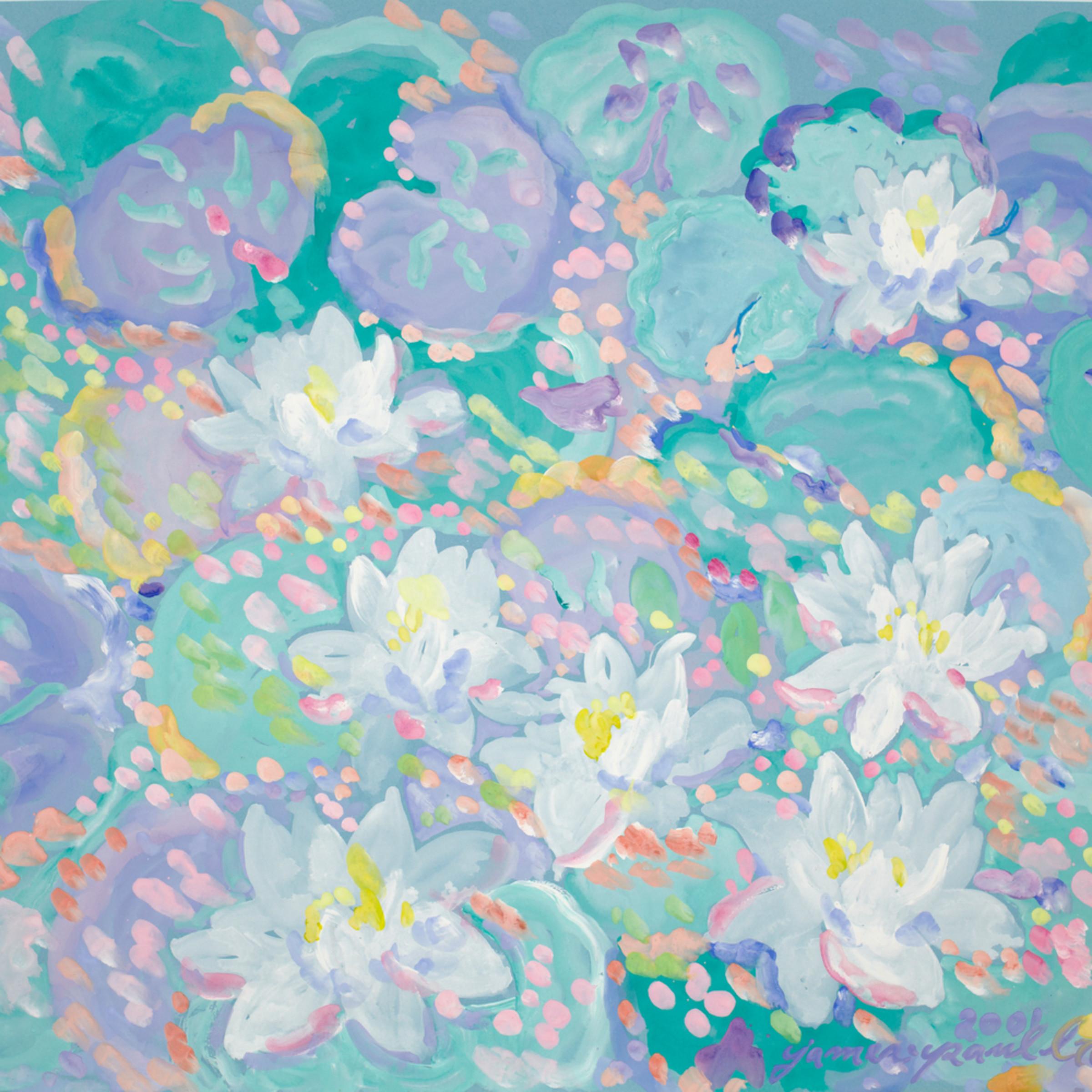 Lotus flowers xonp2e