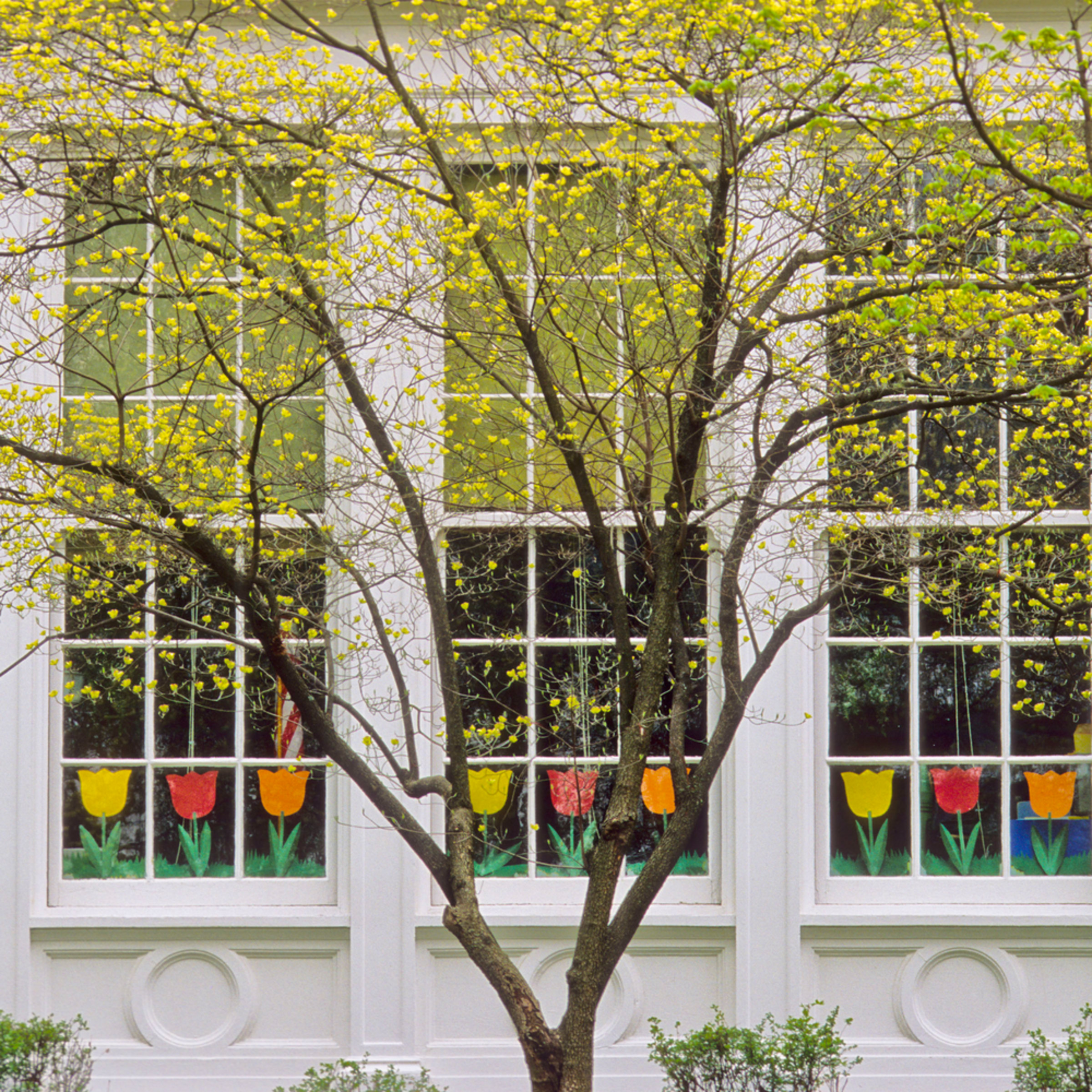 Spring windows whxaex
