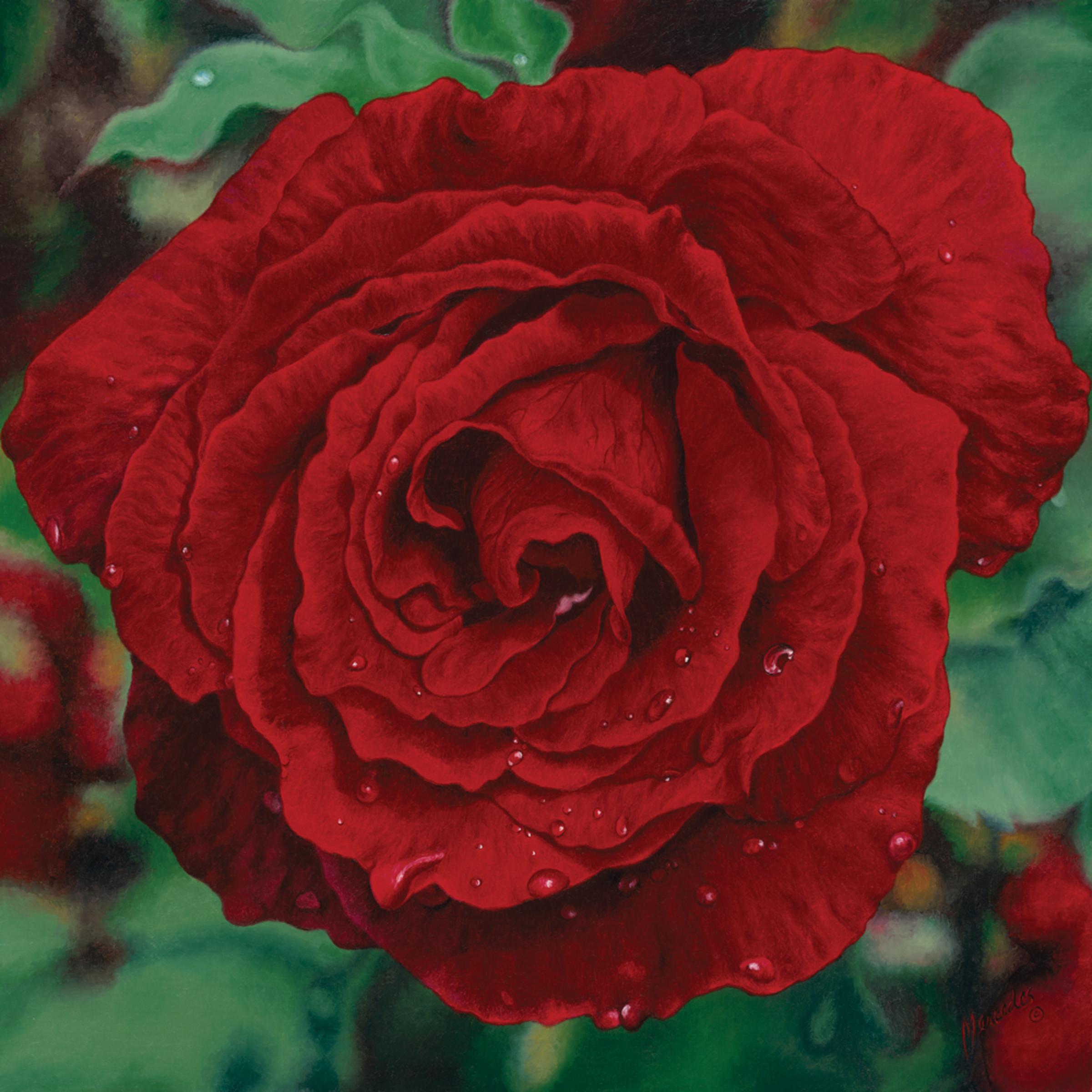 Red rose.rgb xdpmfa