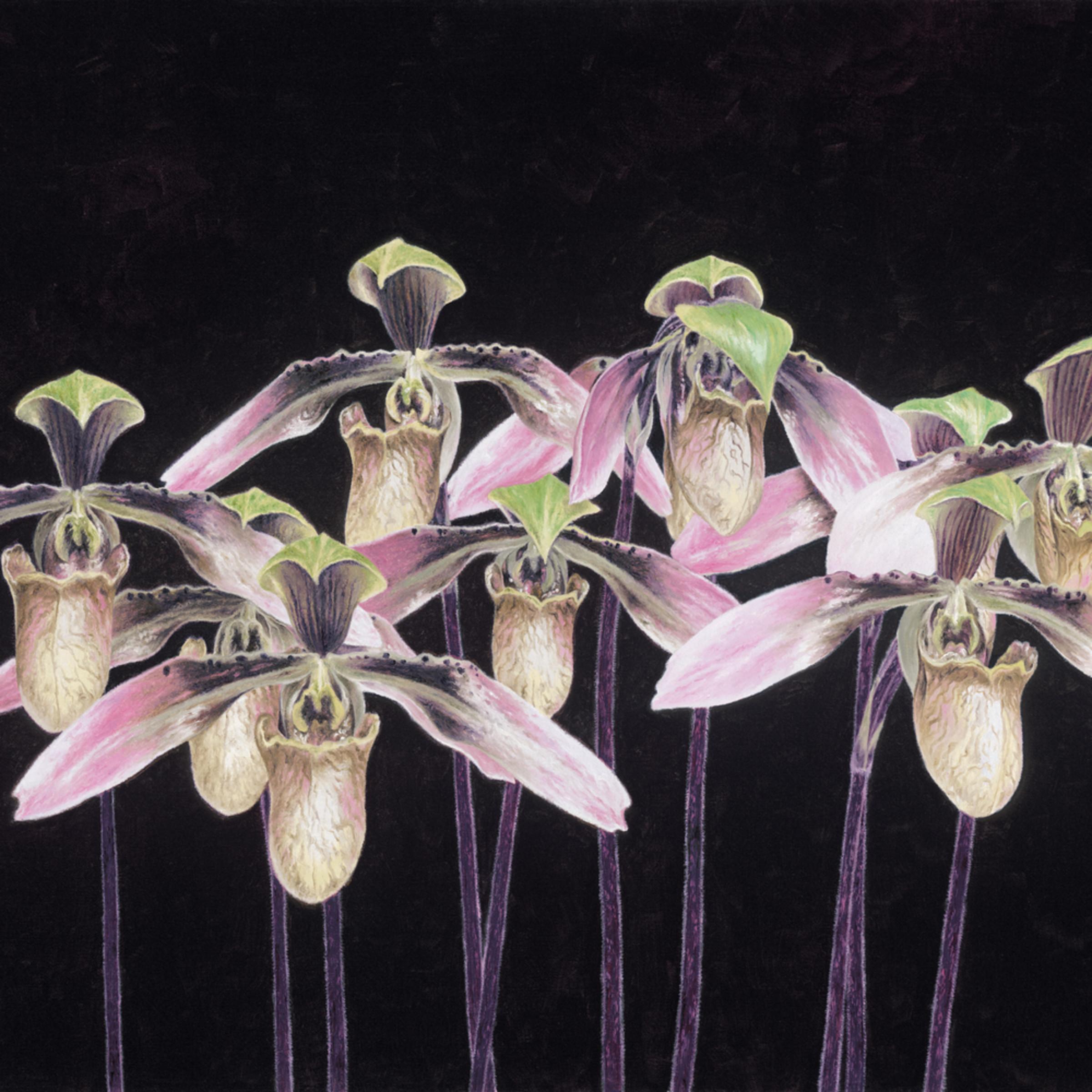 Orchids.rgb ypdgnx