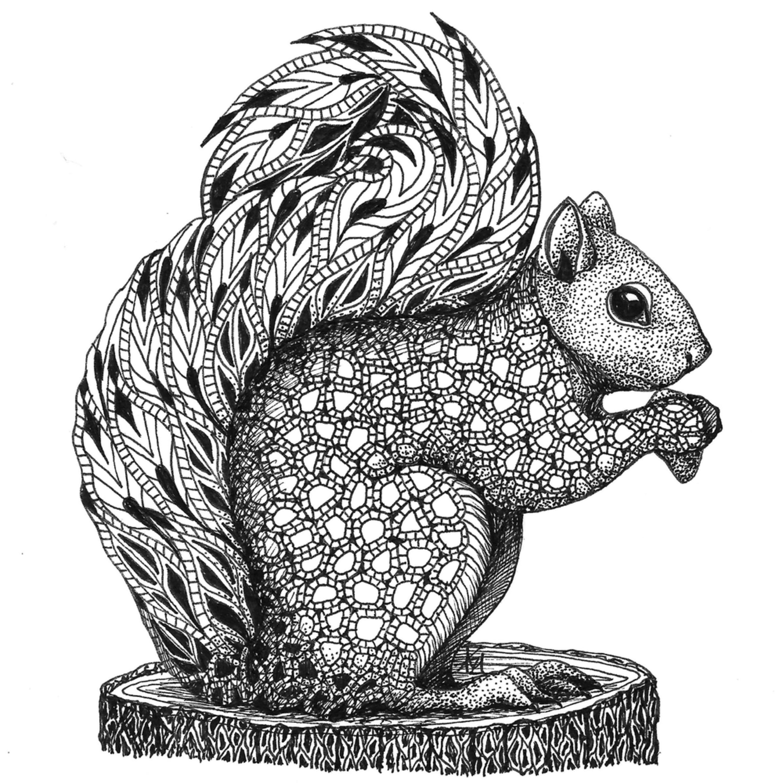 Squirrel jluskn