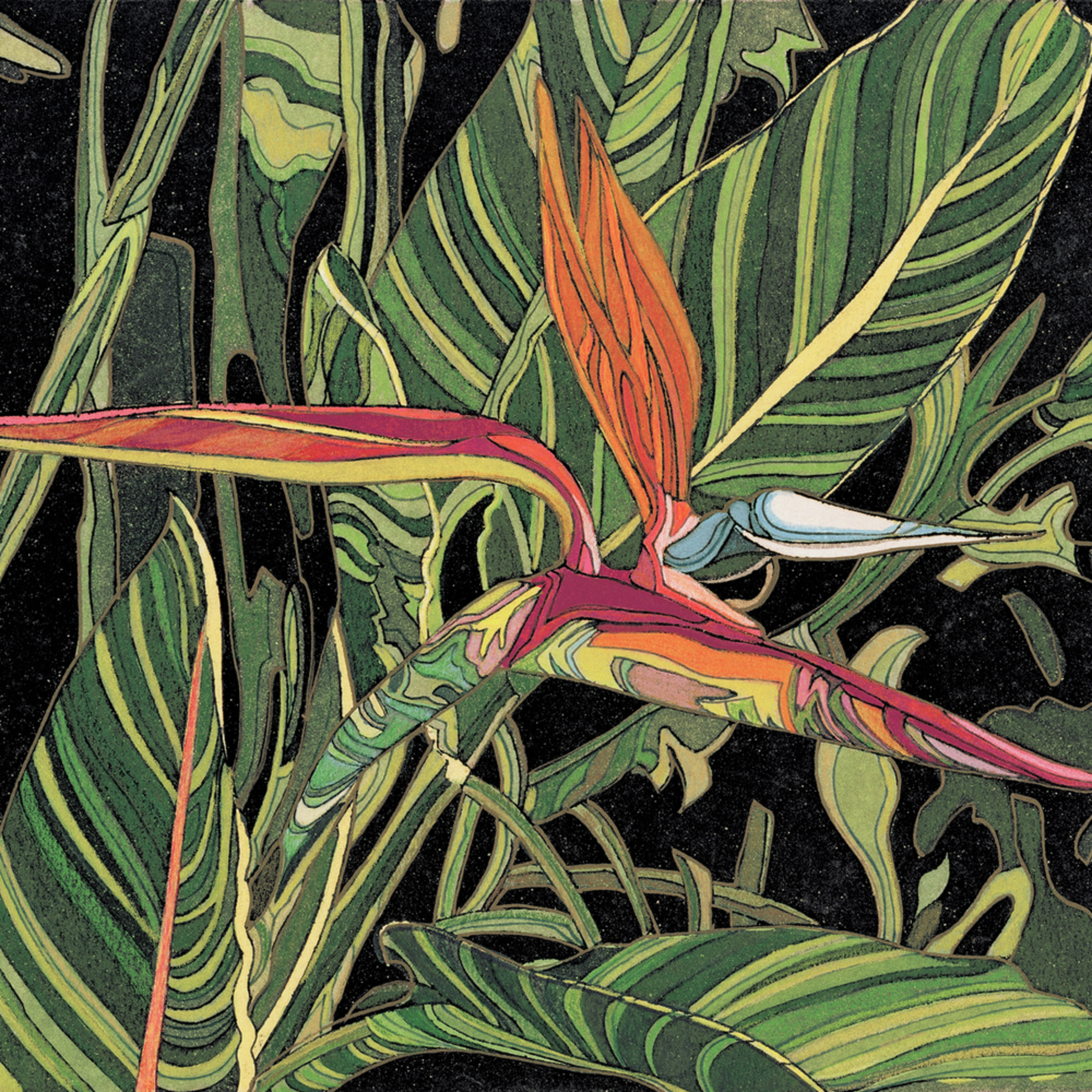 Bird of paradise 12x8 cor24t
