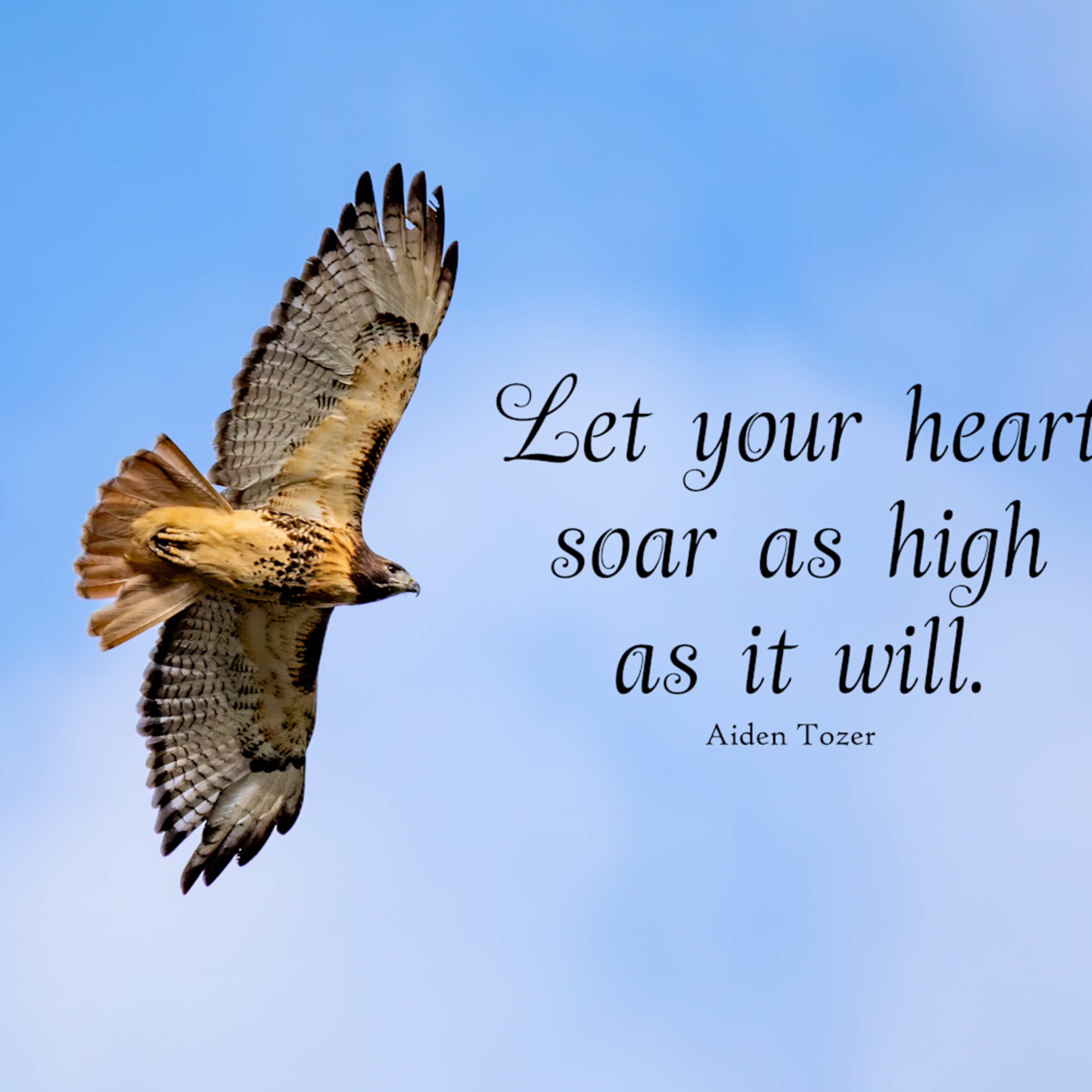 Let your heart soar as high as it will q6wcxo