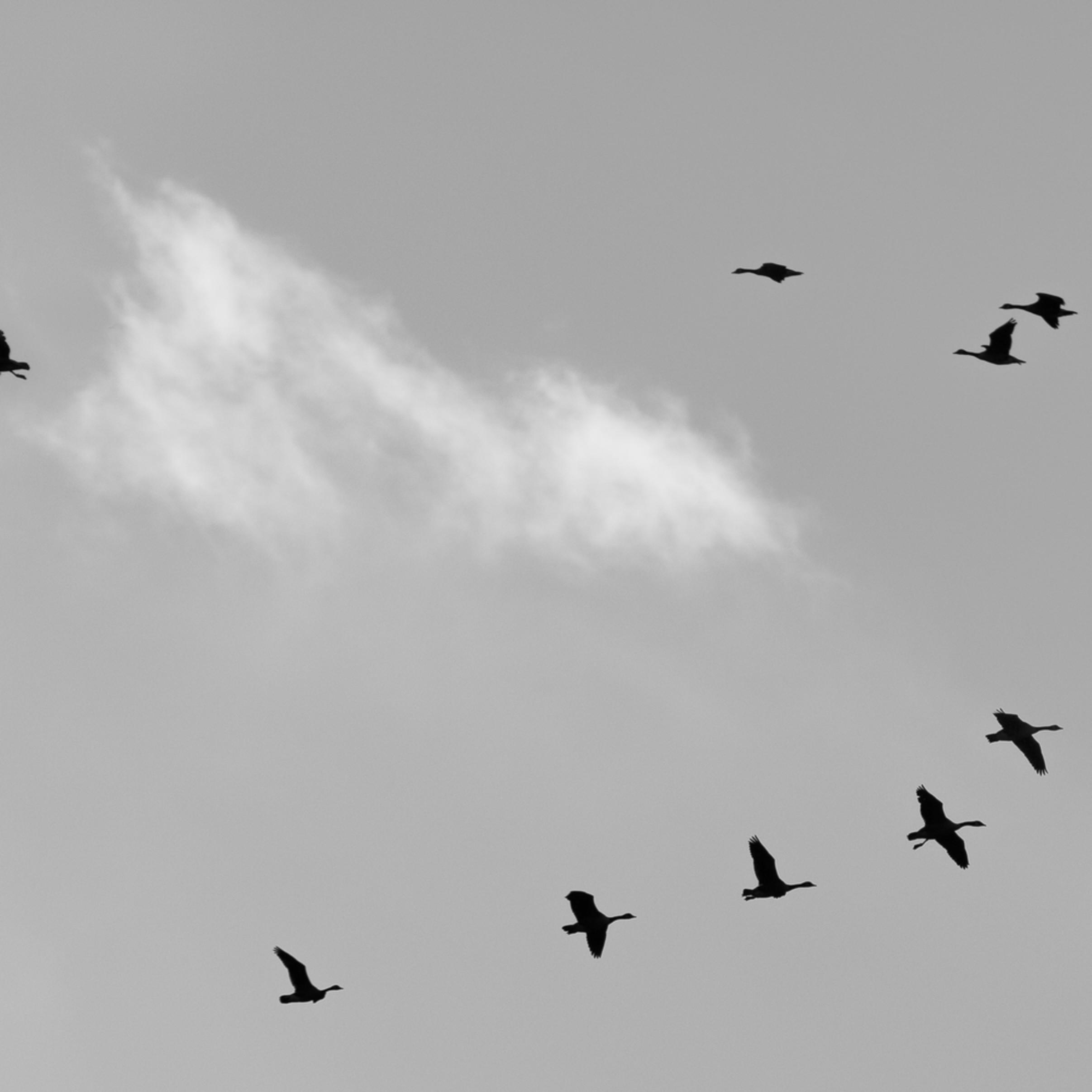 Transitions in flight eaje5m