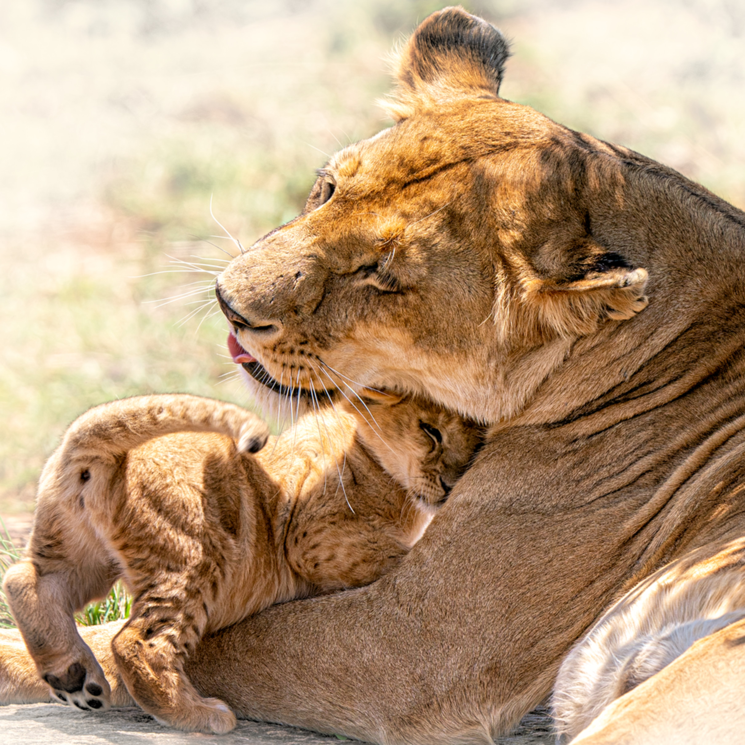 A mother s love pxkzu5