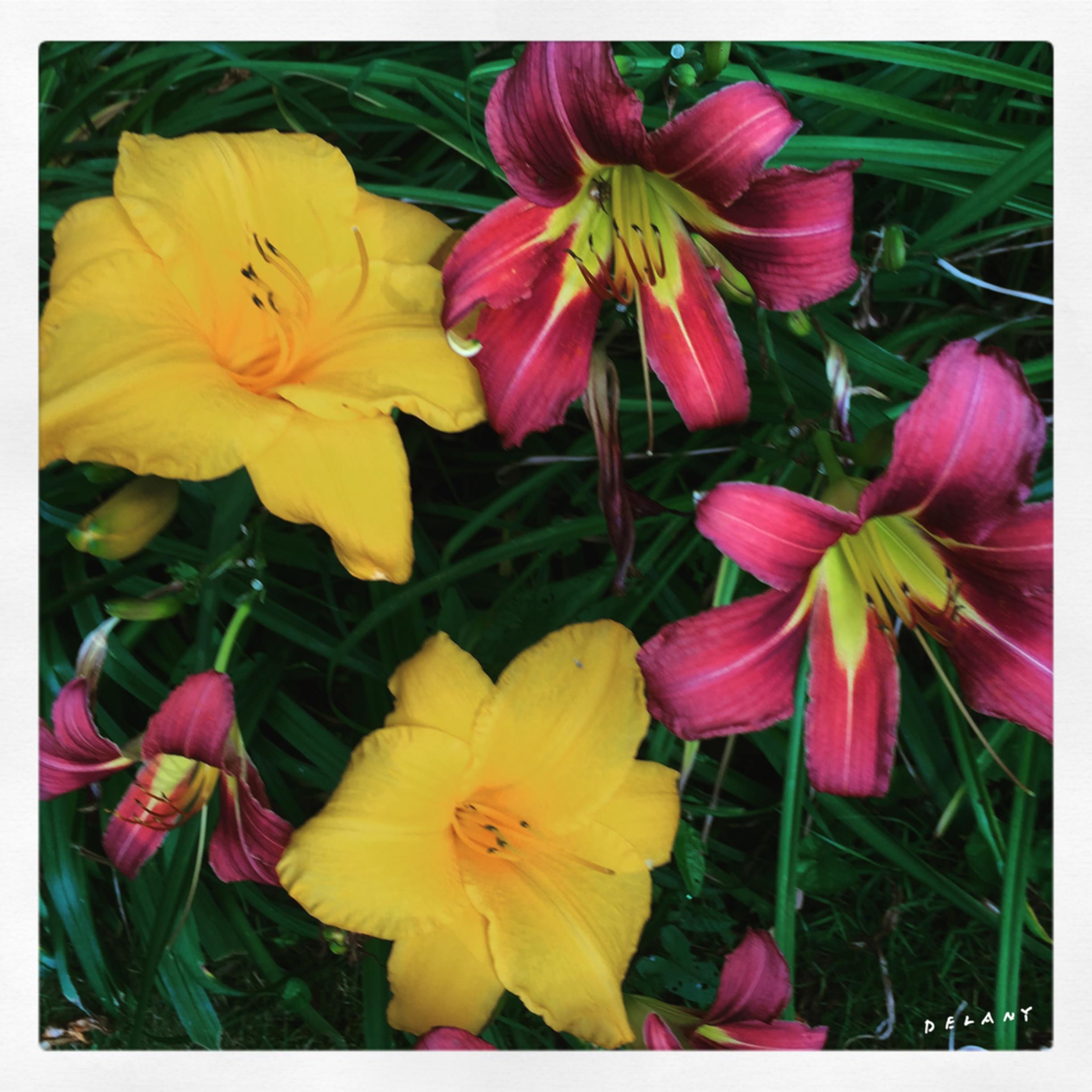 F img 3481 lilliesmix1 mgmwkt