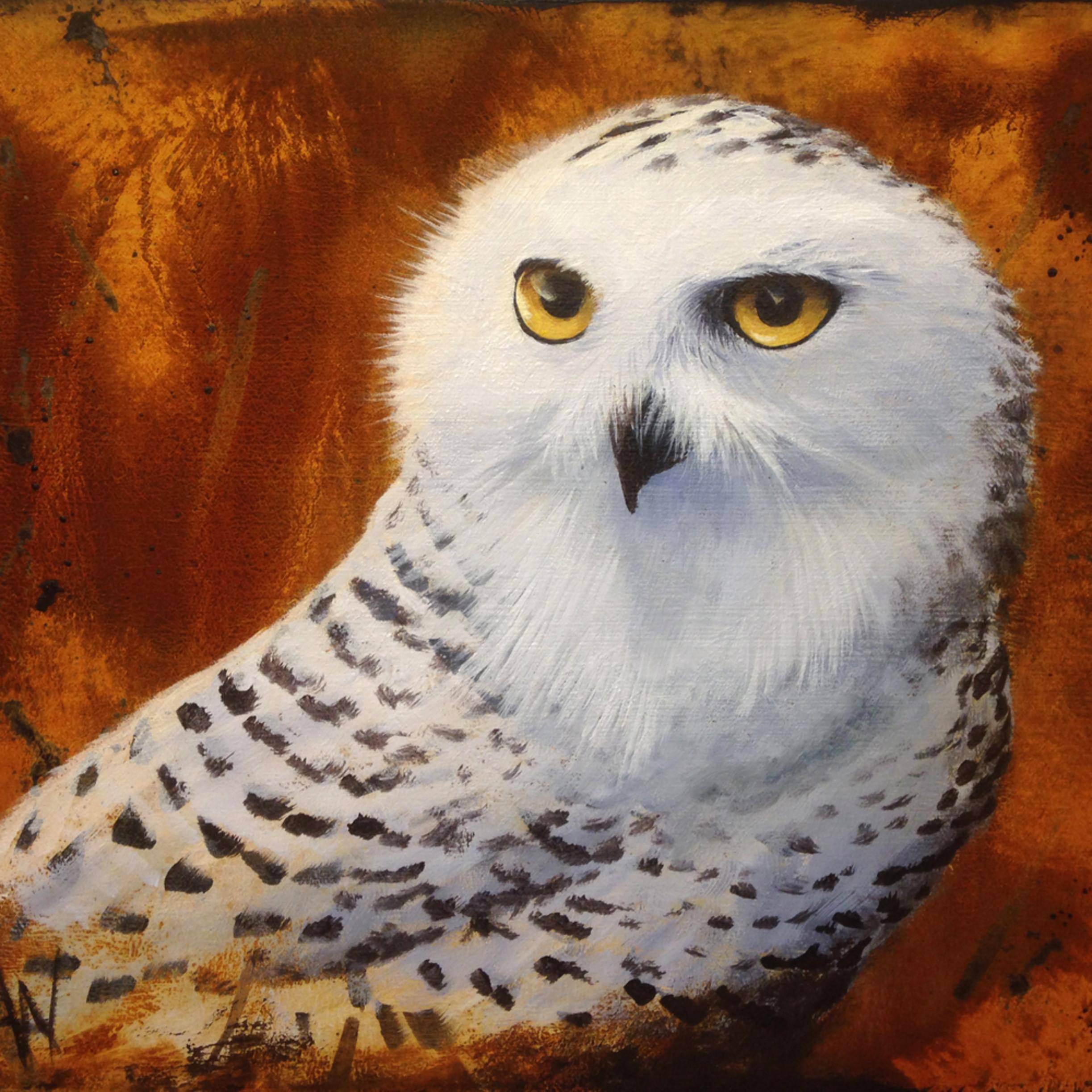 Snowy owl lkby4d