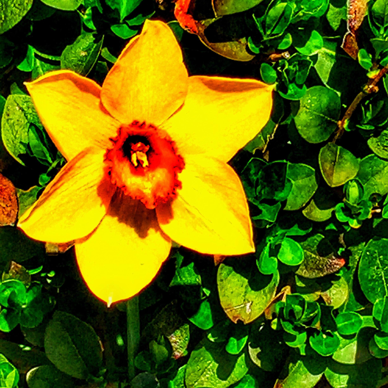 Yellow flower wpemc7