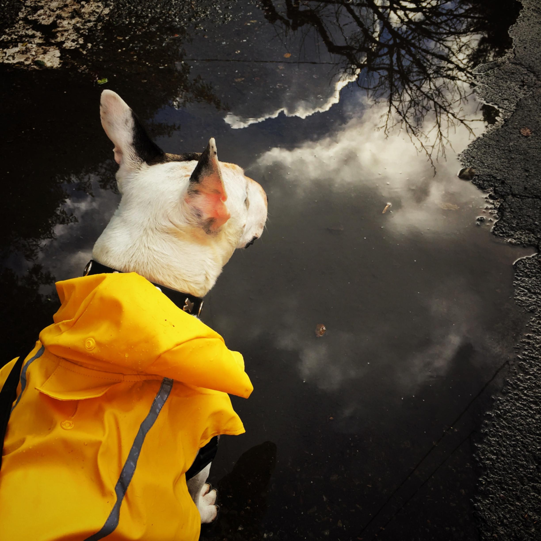 A walk in the rain img 9884 gyg8rt
