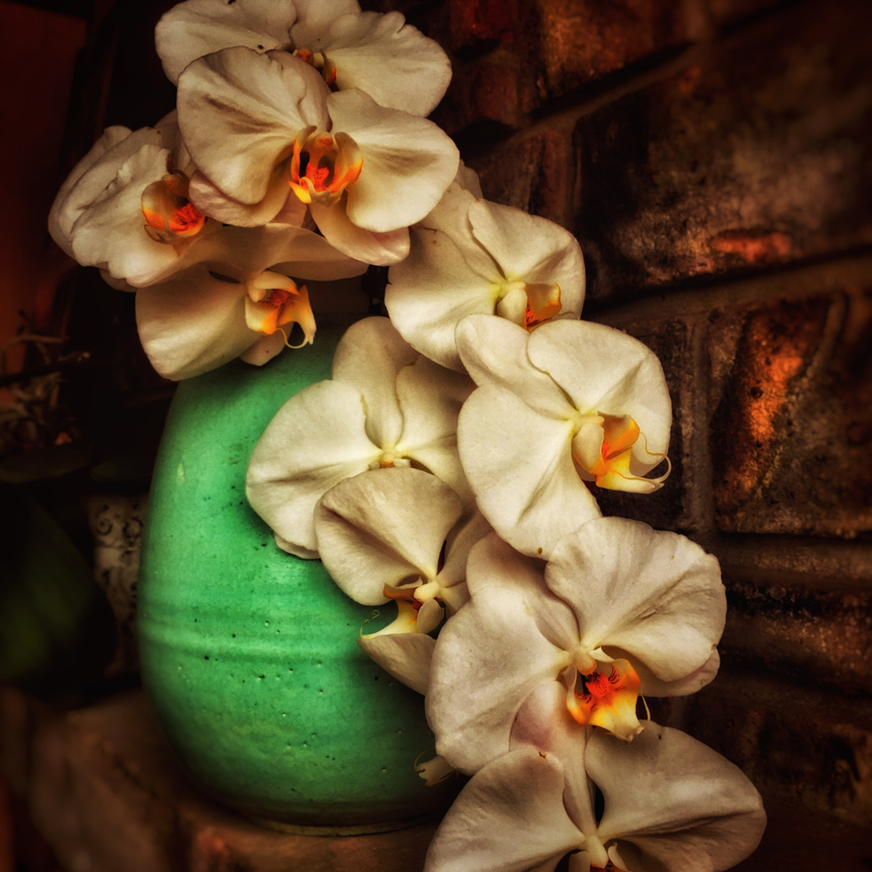 Whites orchids img 1584 fx21ua