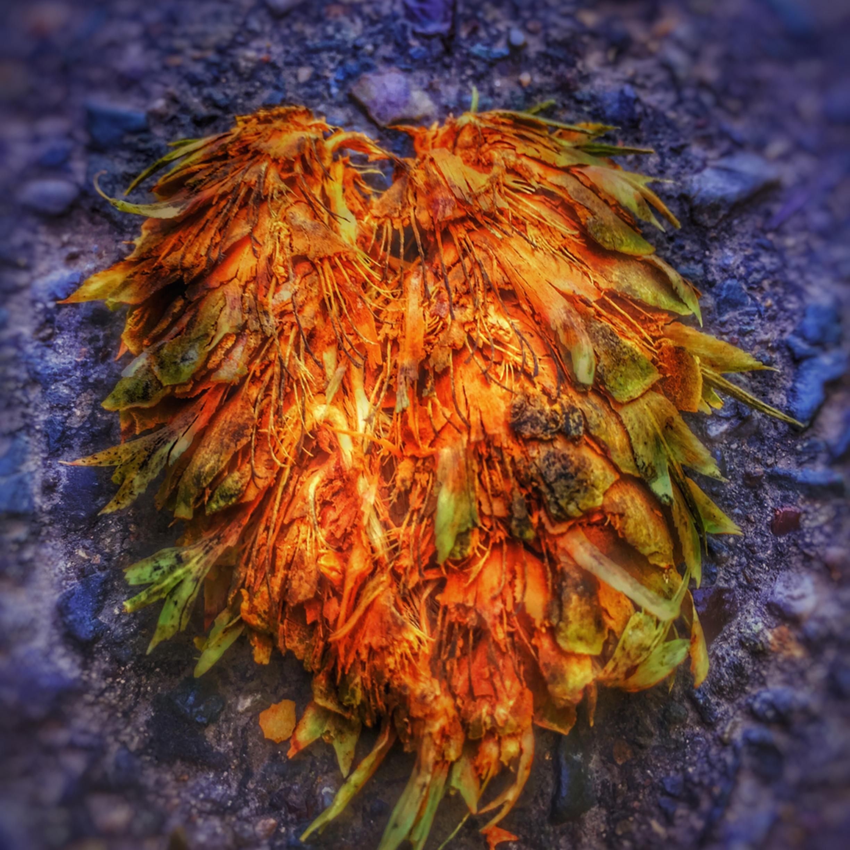 Dragon heart ymtzcv