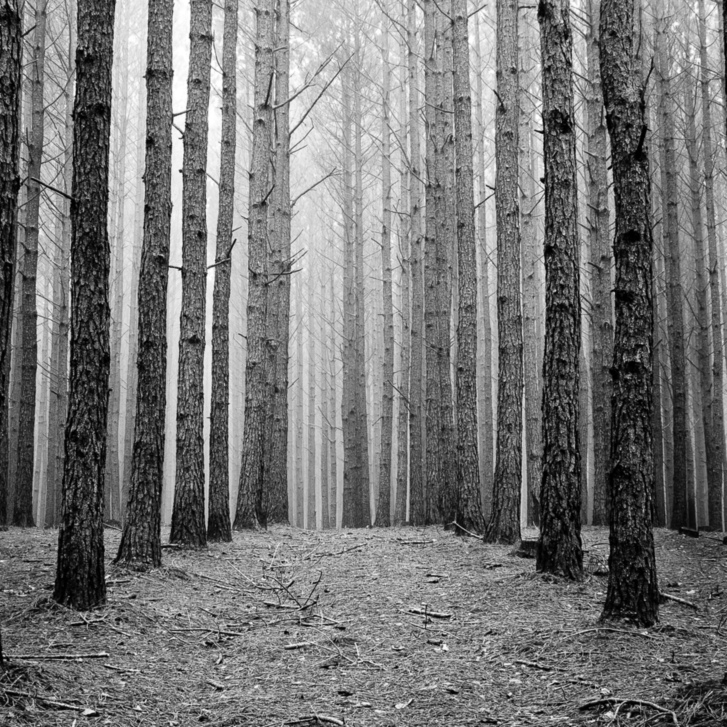 Pineforestforprinting final 4328 eiqqqm