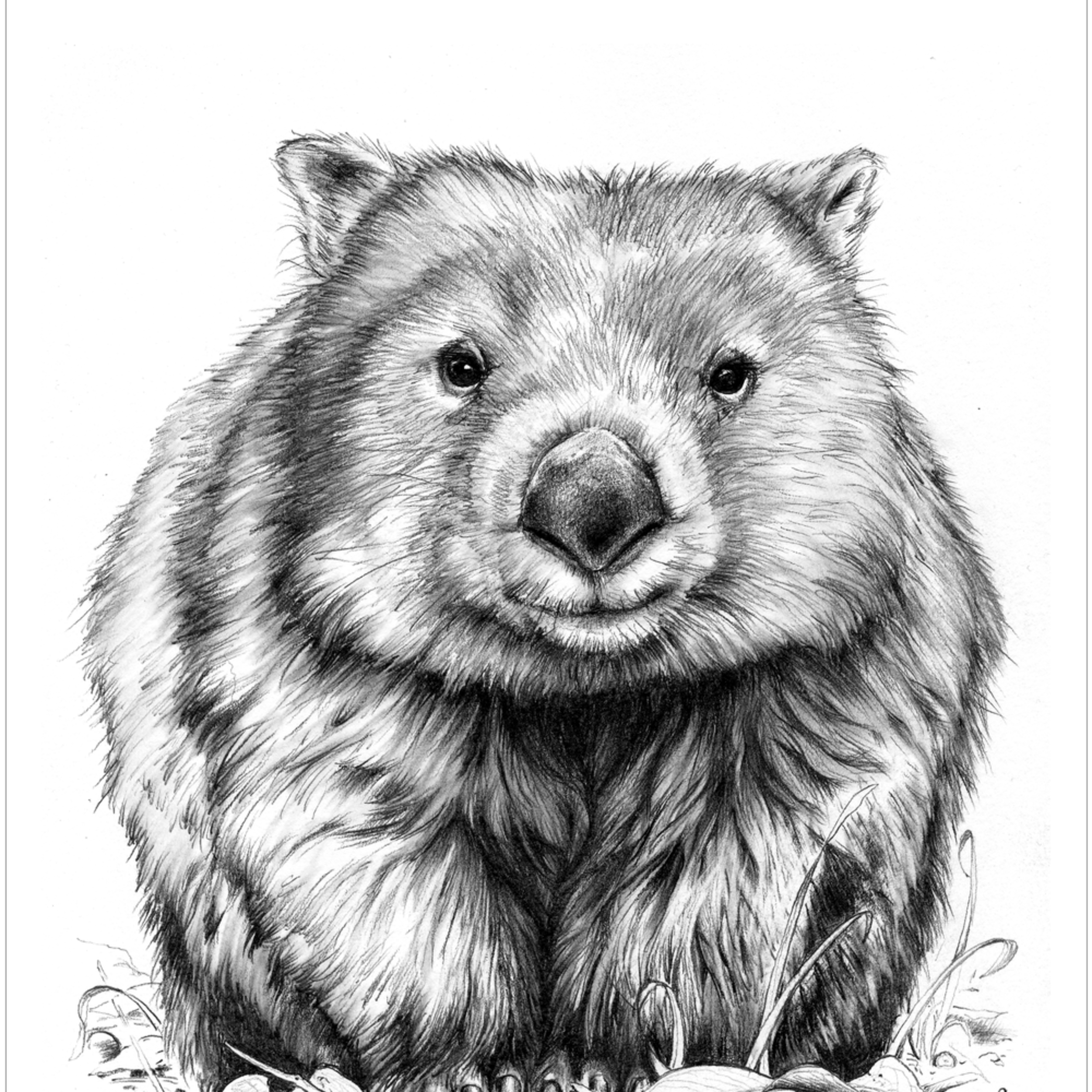 Wombat pencil drawing may2020 jruzkv