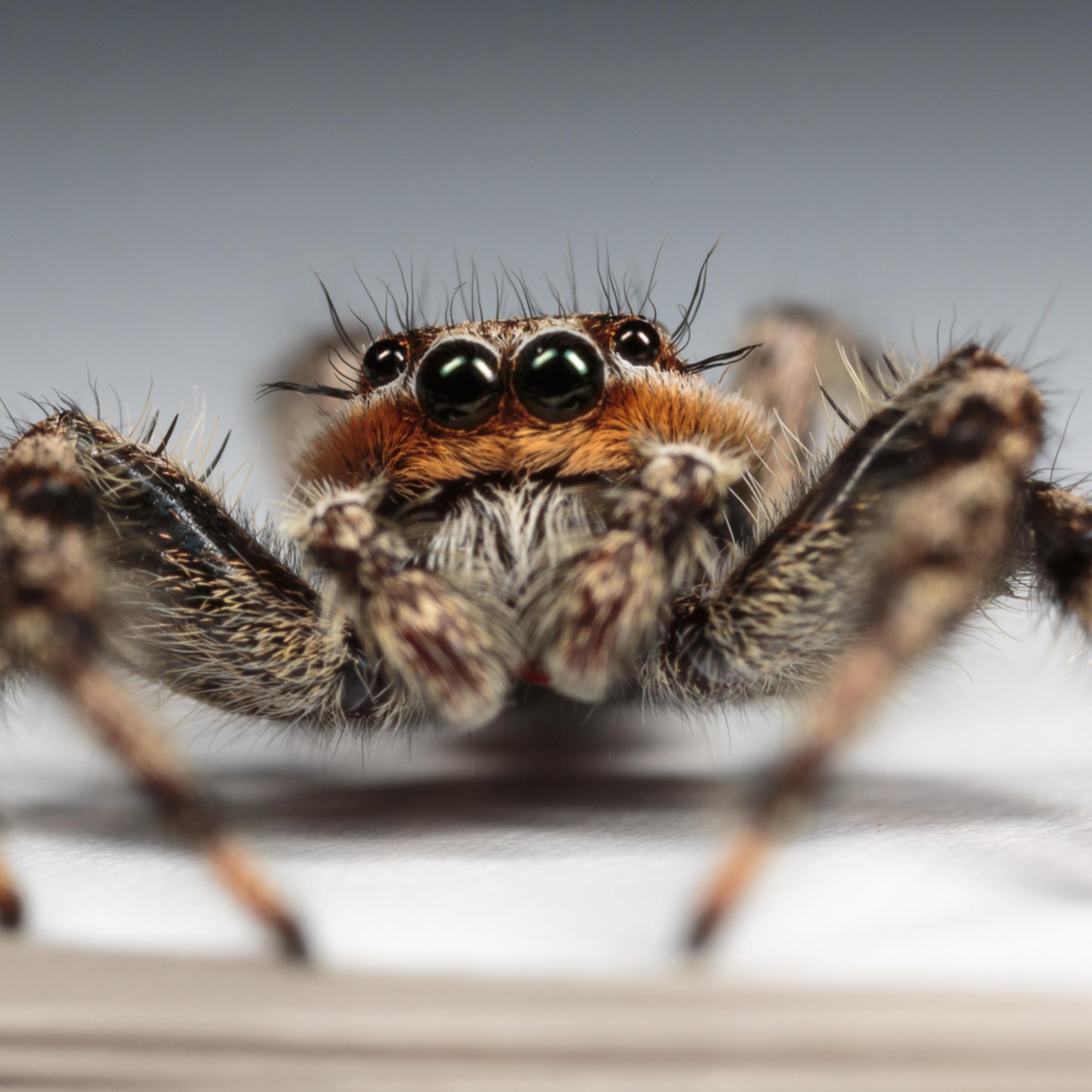 20160829 spider id 00070 wopzlk