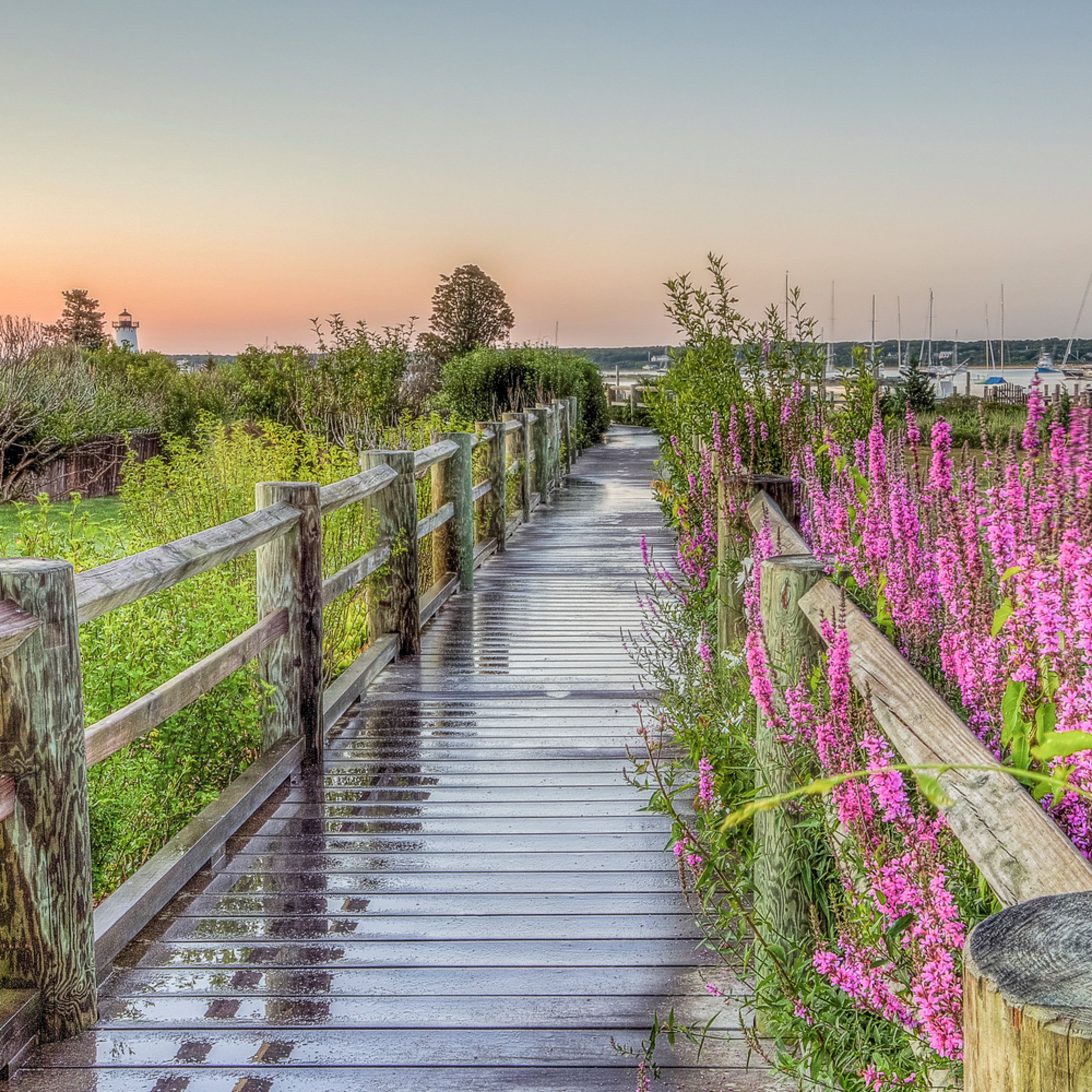 Edgartown light wakway flowers qxtpng