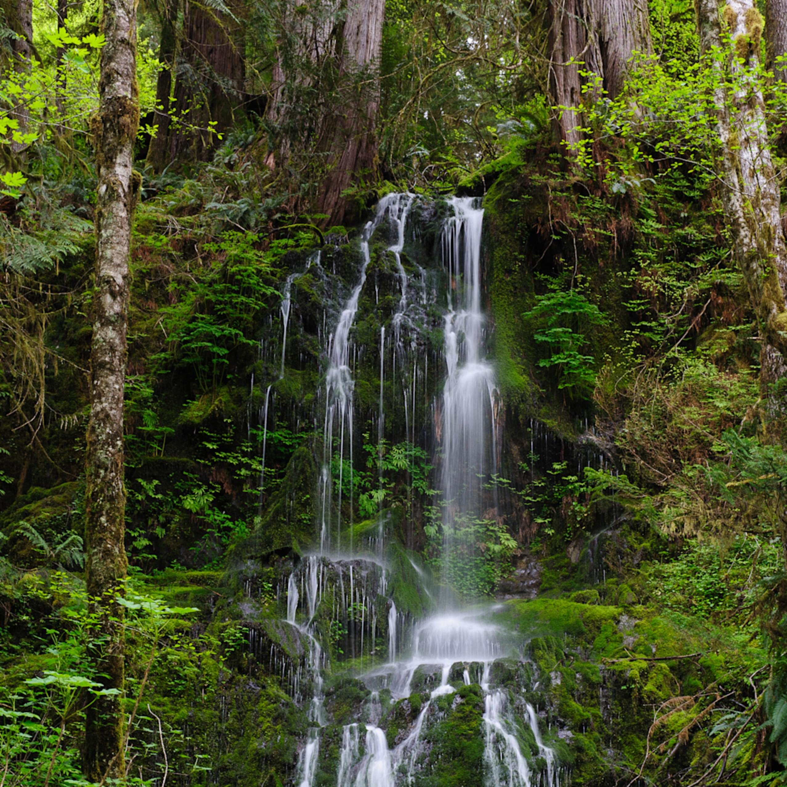 Springtime waterfall olympic national park wa 2016 2 pjvtgj