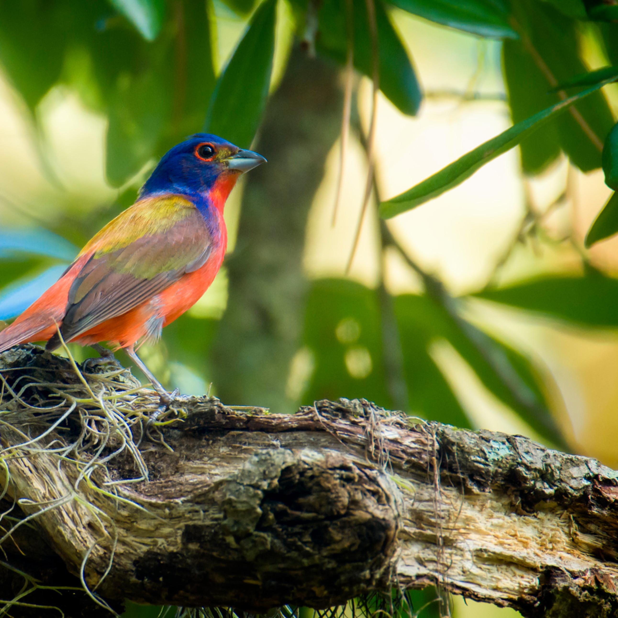 Backyard birds june 2020 20200611 0473 mhc11c
