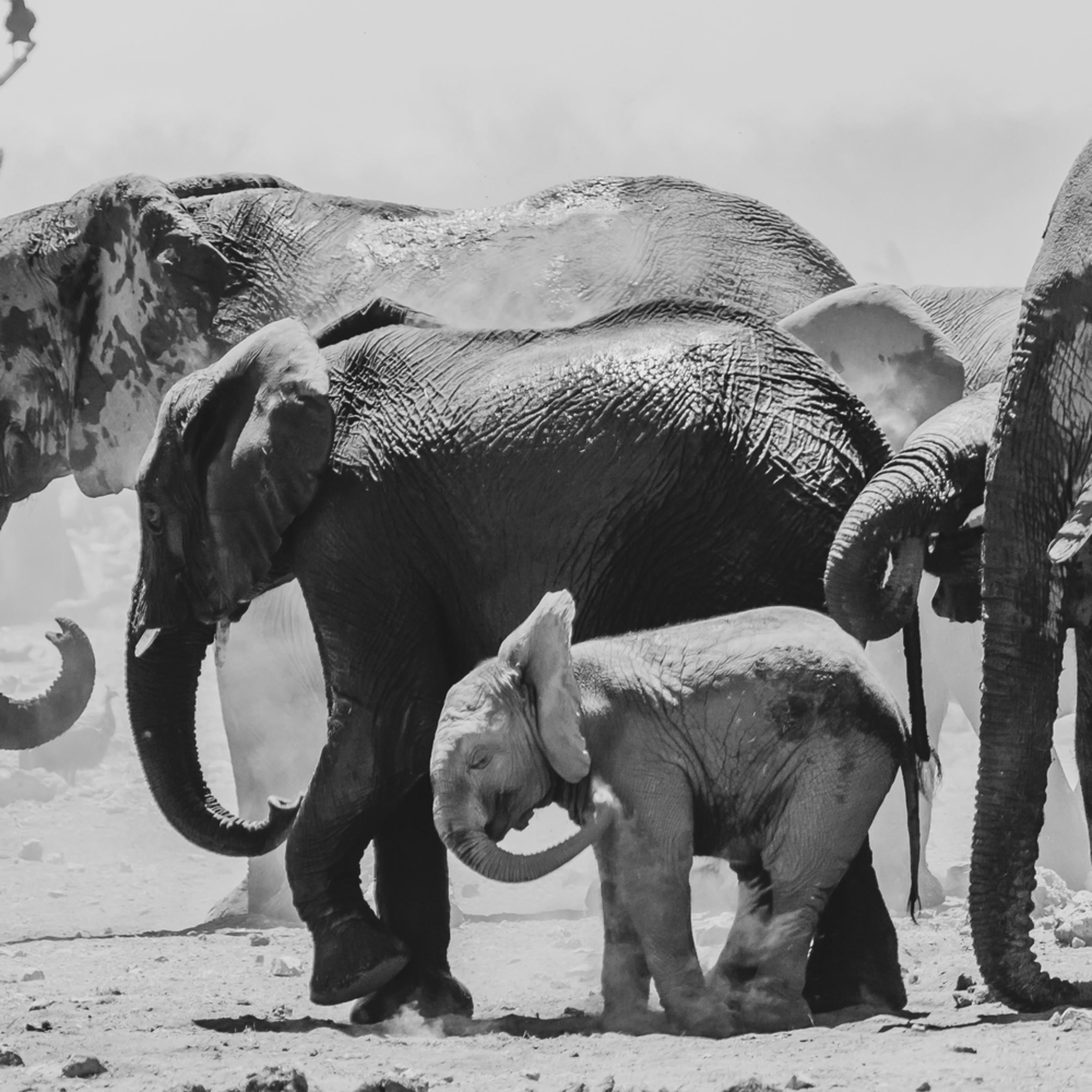 Elephantact rjfiz9