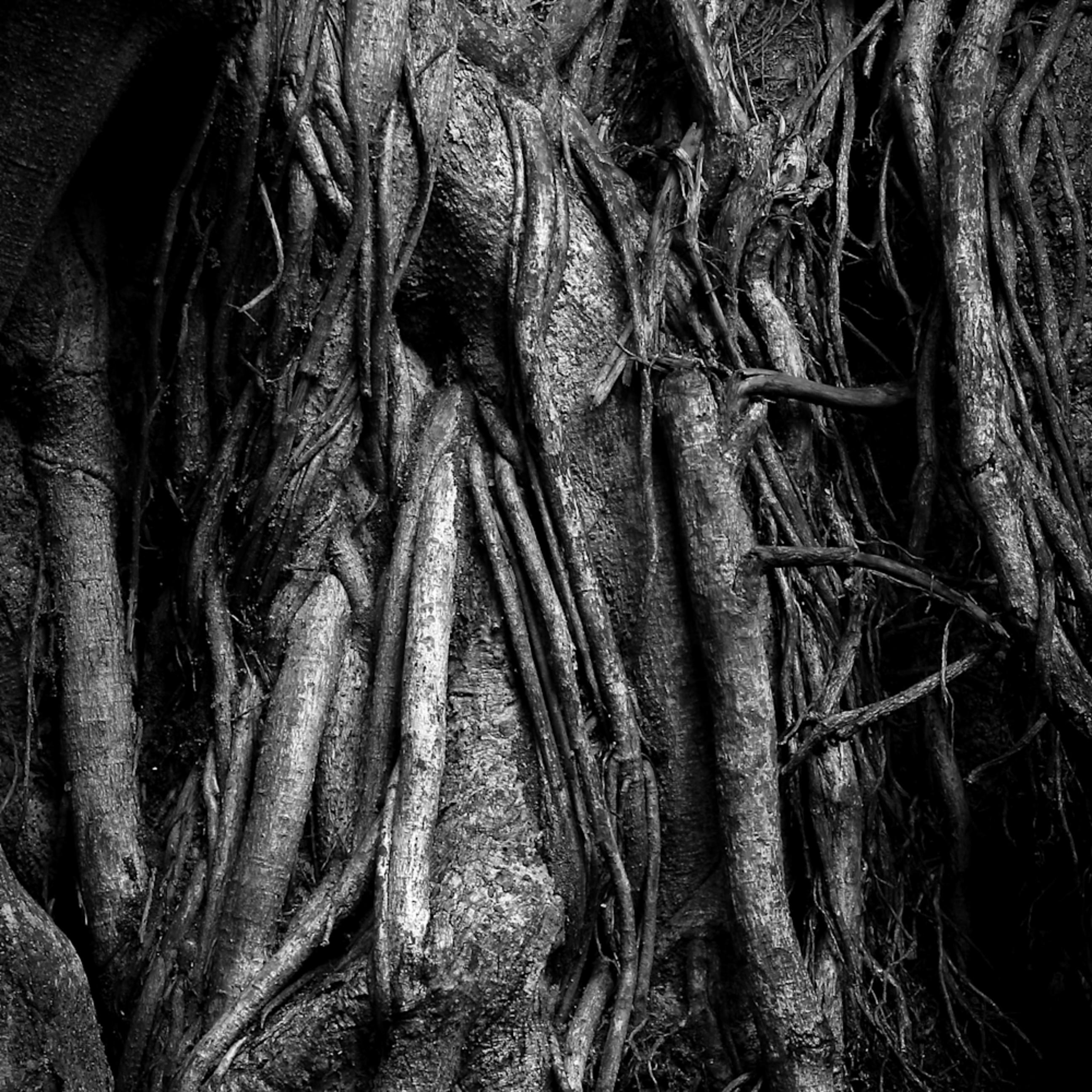 Hanging roots maui izopyy