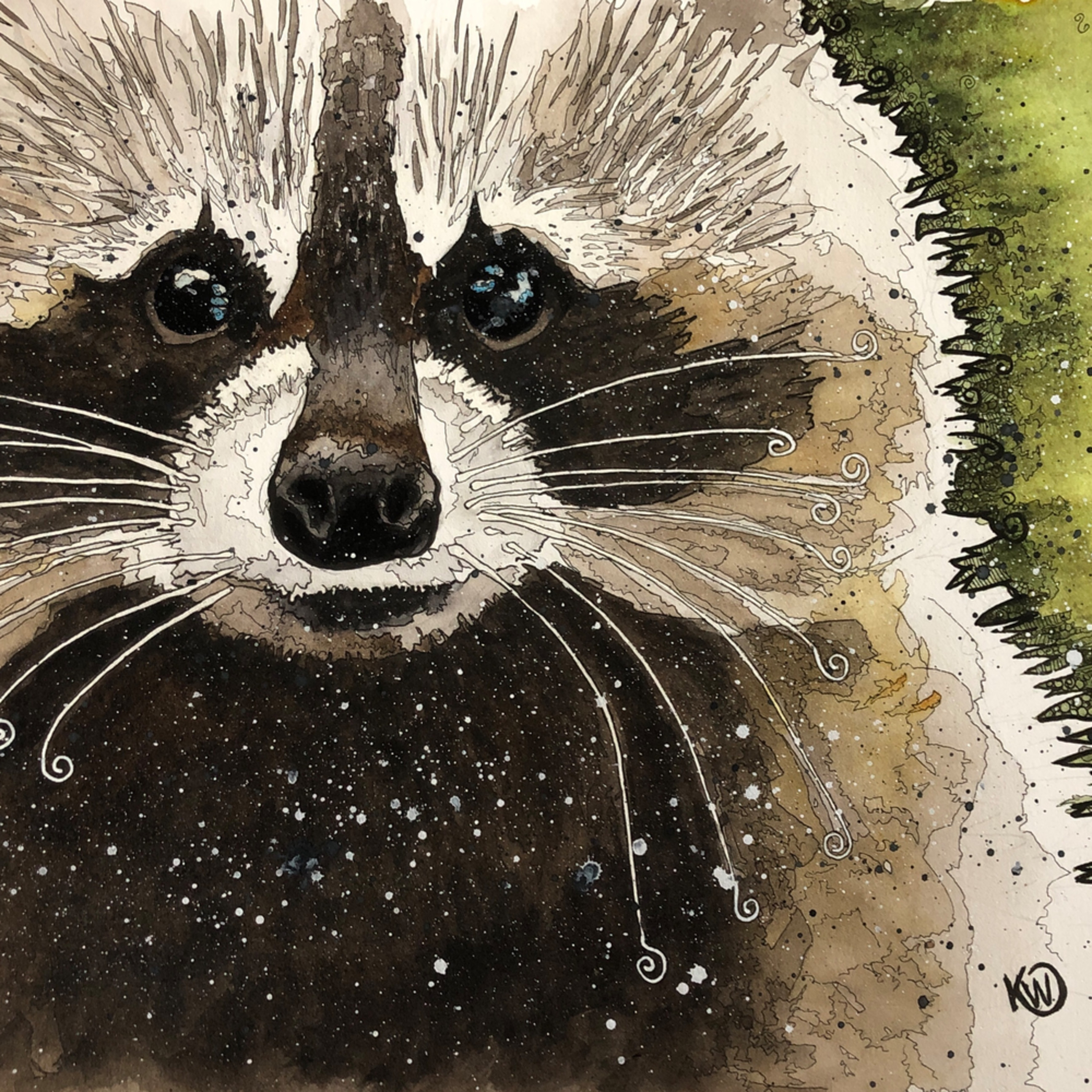 Raccoon tm6nlw