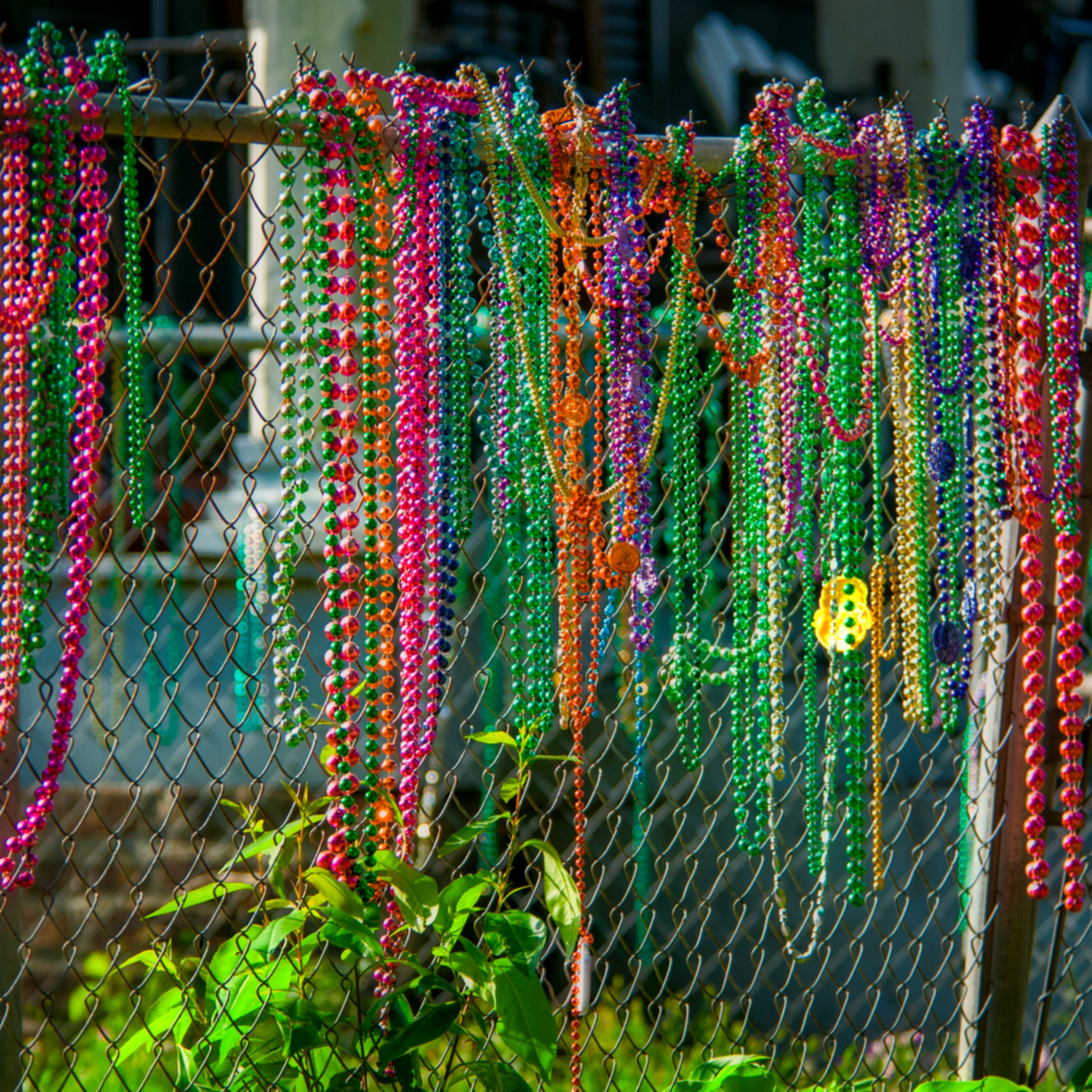 Andy crawford photography mardi gras beads fence wsjweh