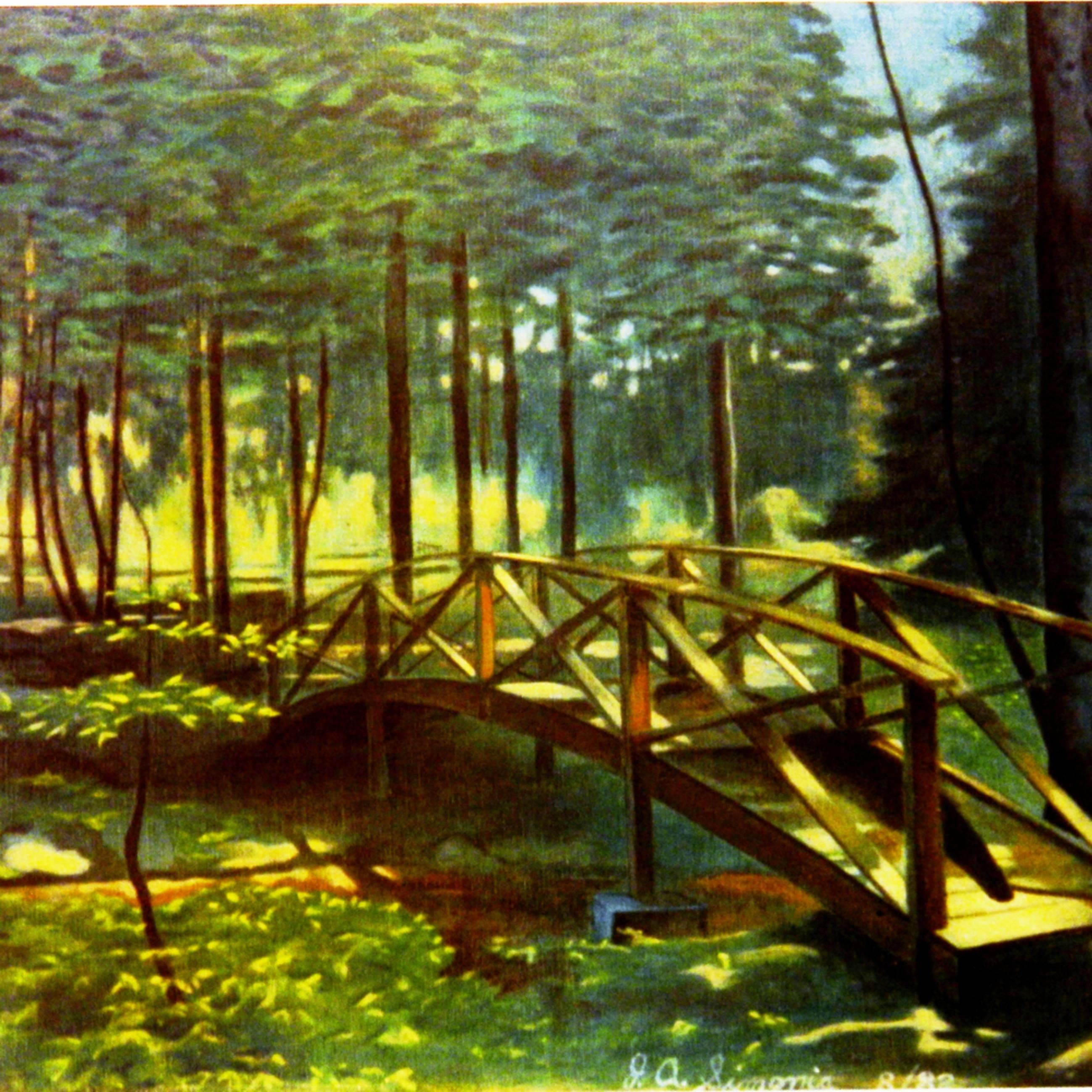 Light on the forest floor ut njujtn