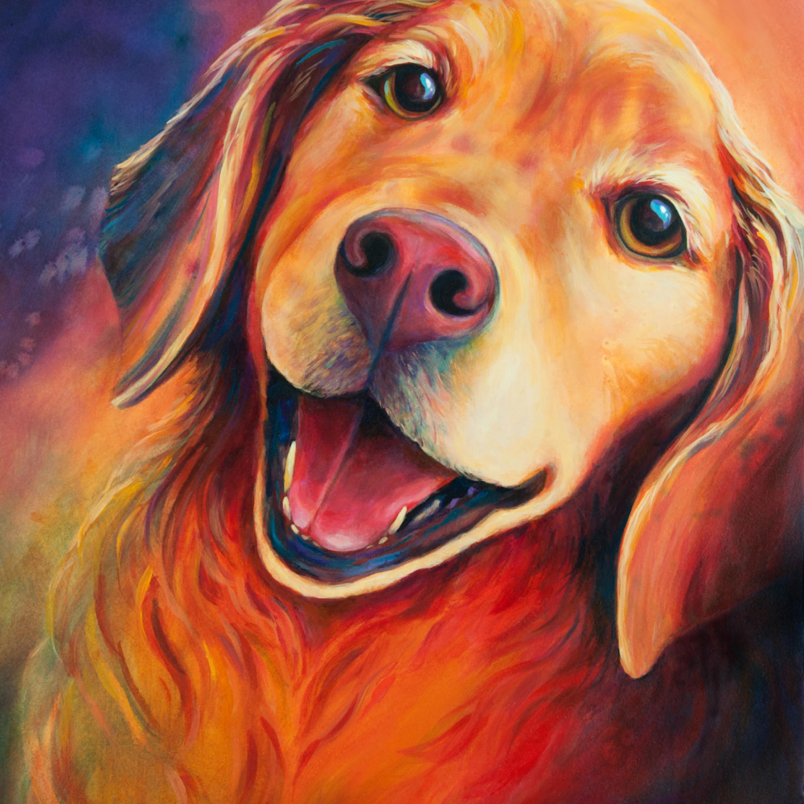 Dog golden little pete zuzvwz