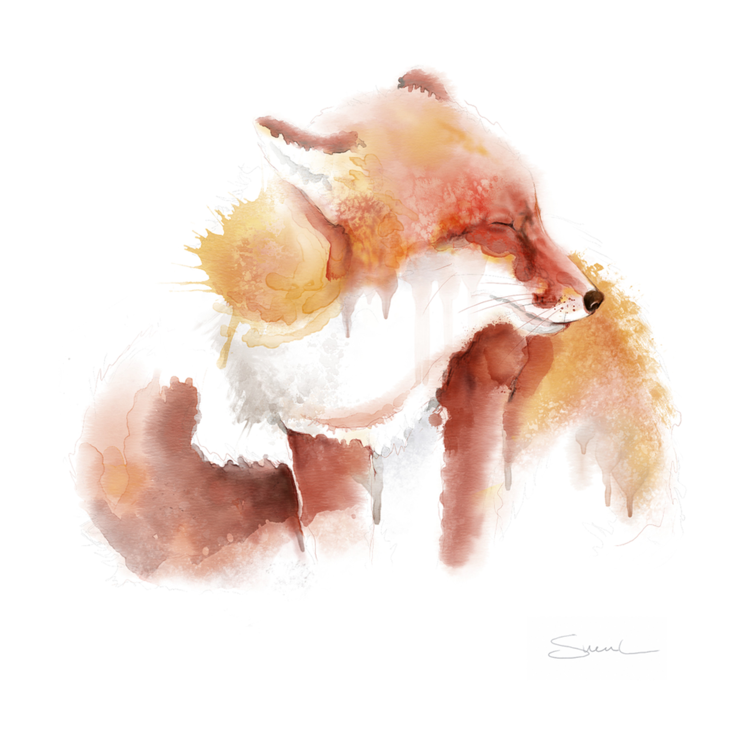 Fox watercolor wzw5ub