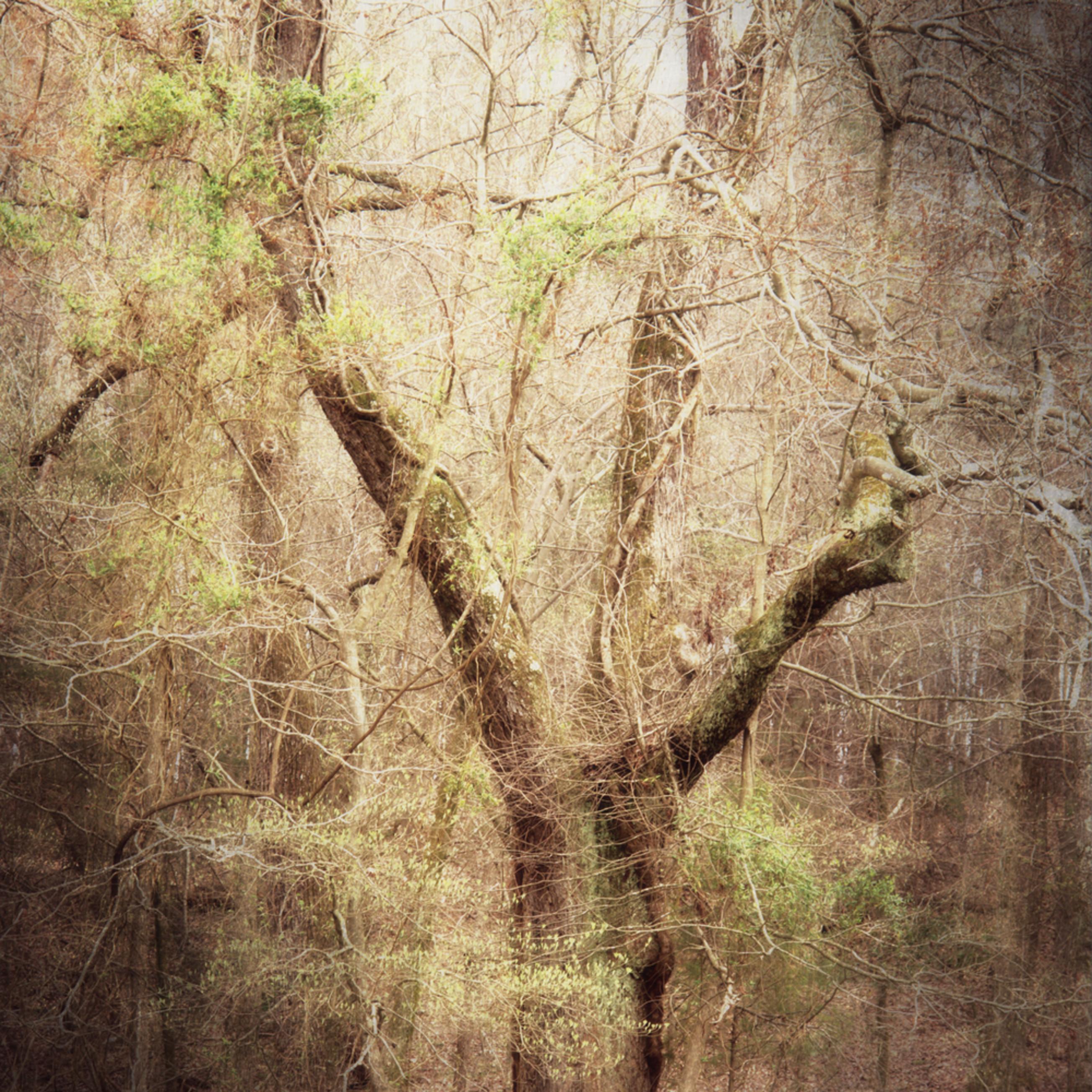 Tree mystery dsc01190 xmow9p