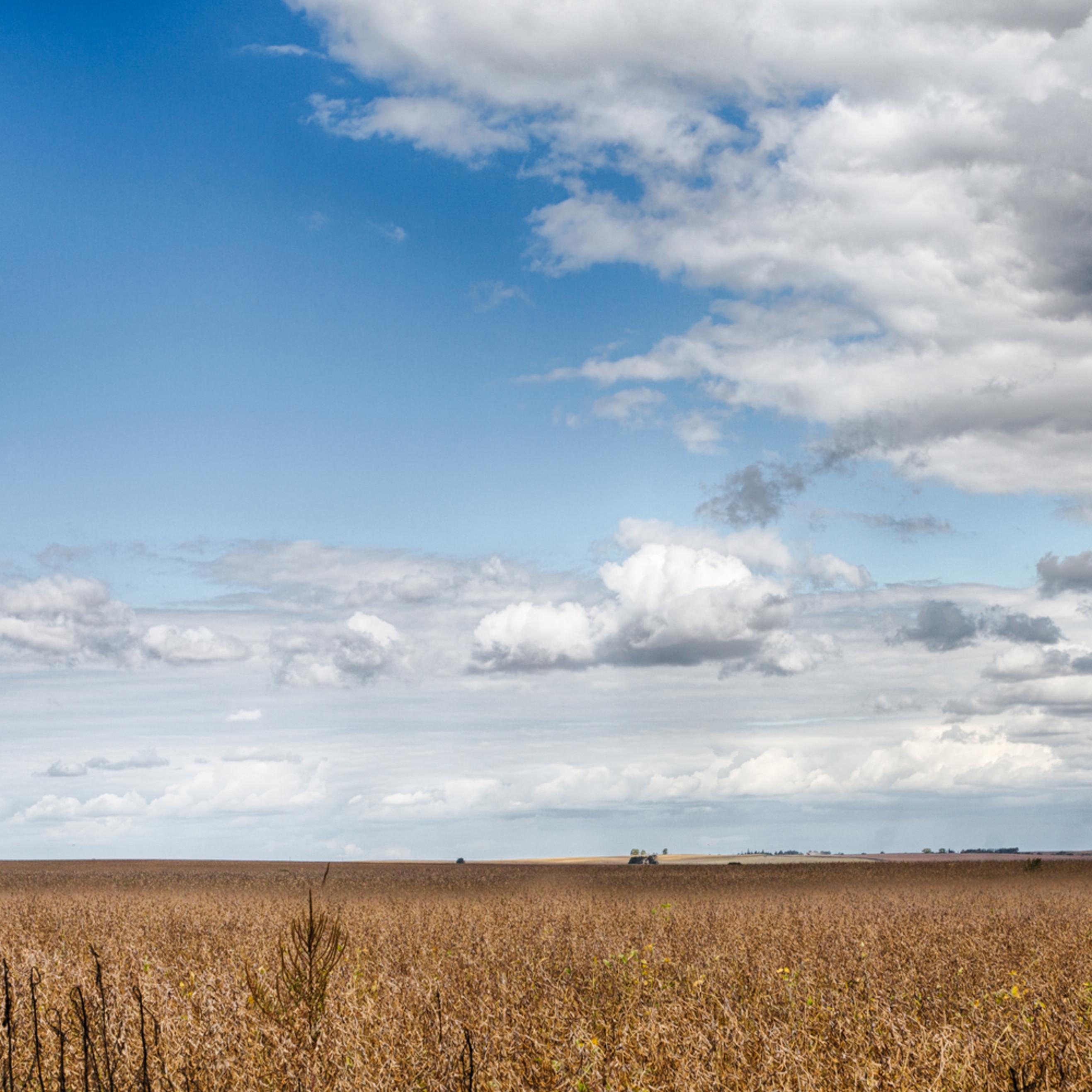 Argentine soybean fields pdlwnk