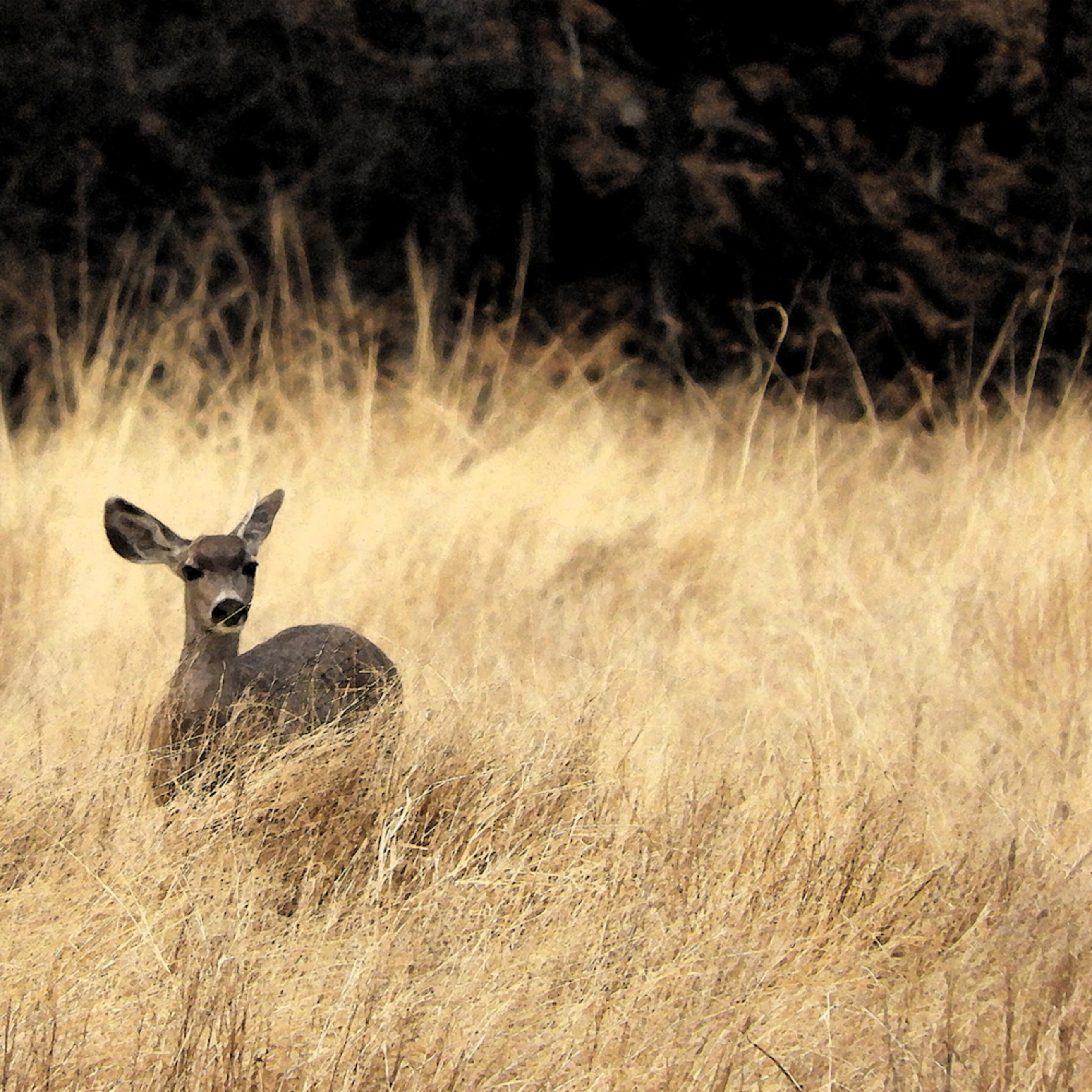 Dscn0173 deer in grass yrfjrv