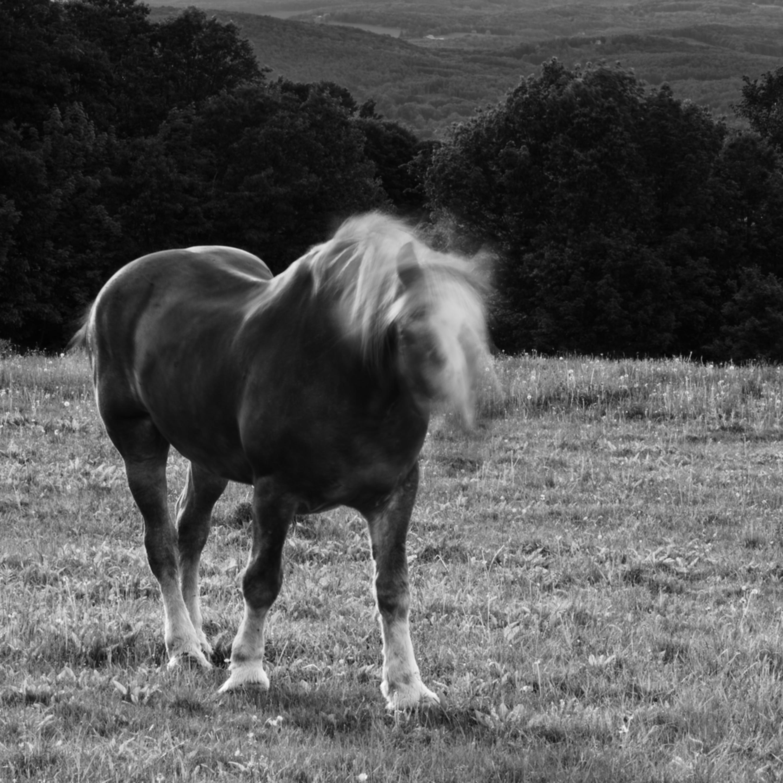 Horse moves v uz7ubu