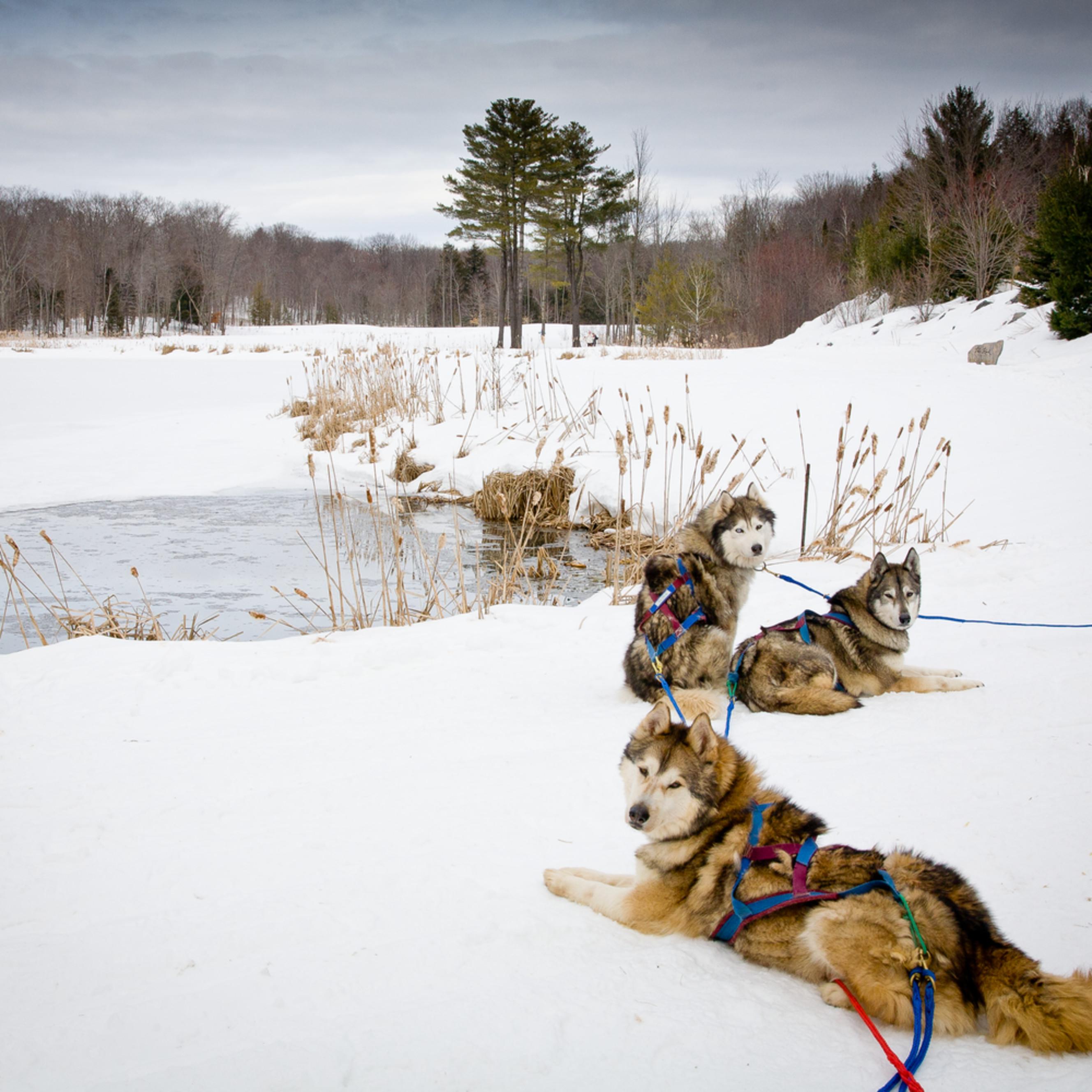 Sled dogs eiplrn