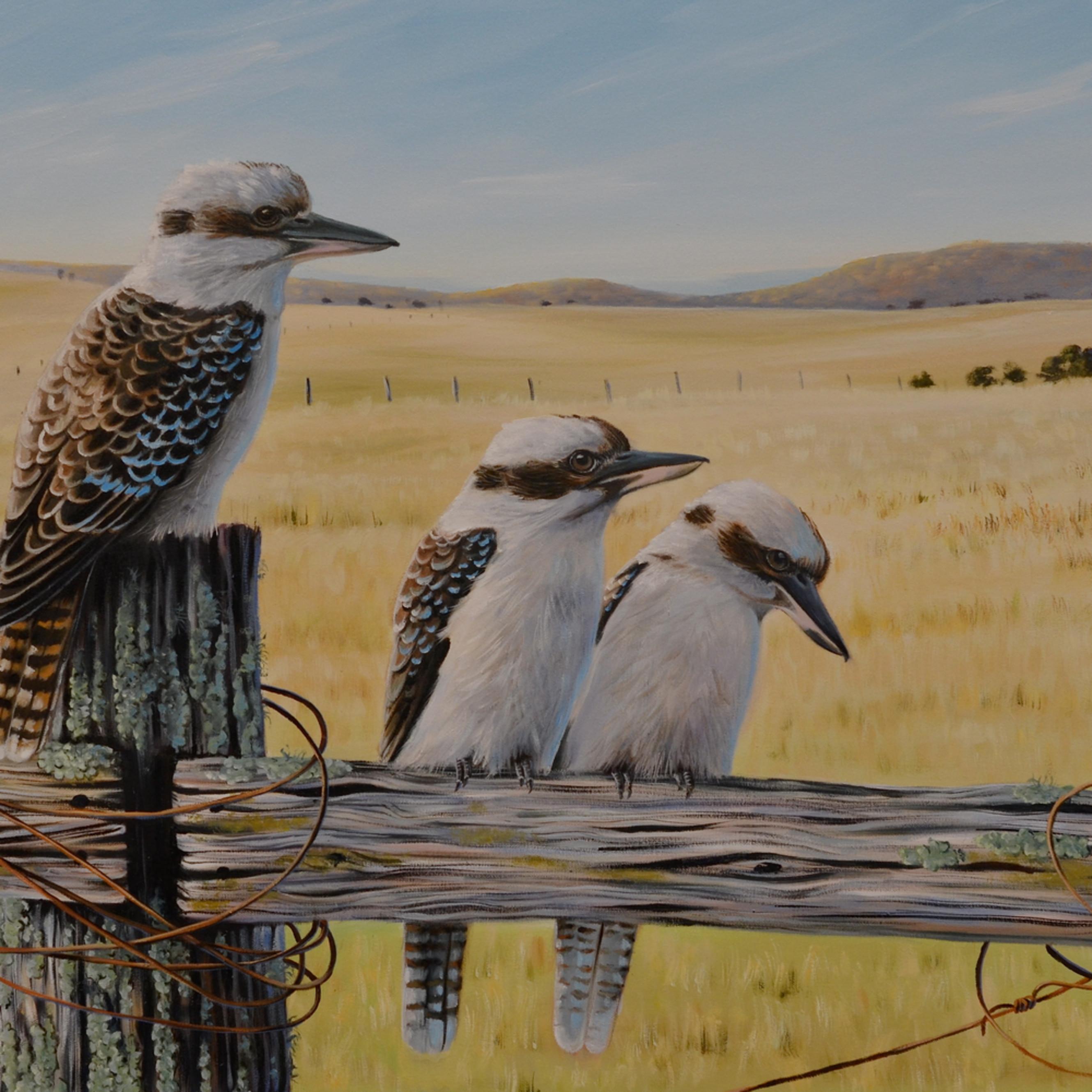 Grassland gathering   kookaburras bod4tx