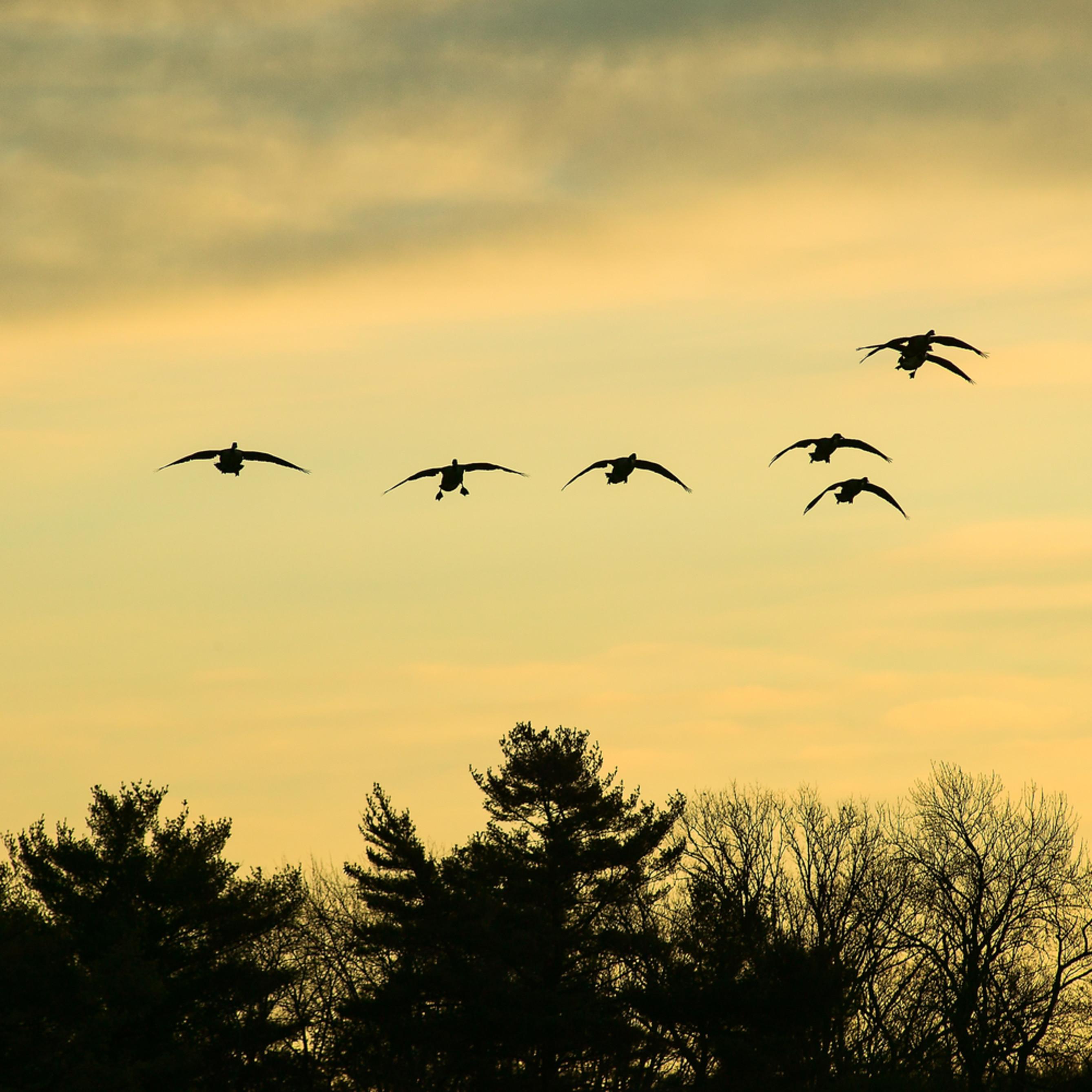 20061212 geese 091 2 pr v8cmdj