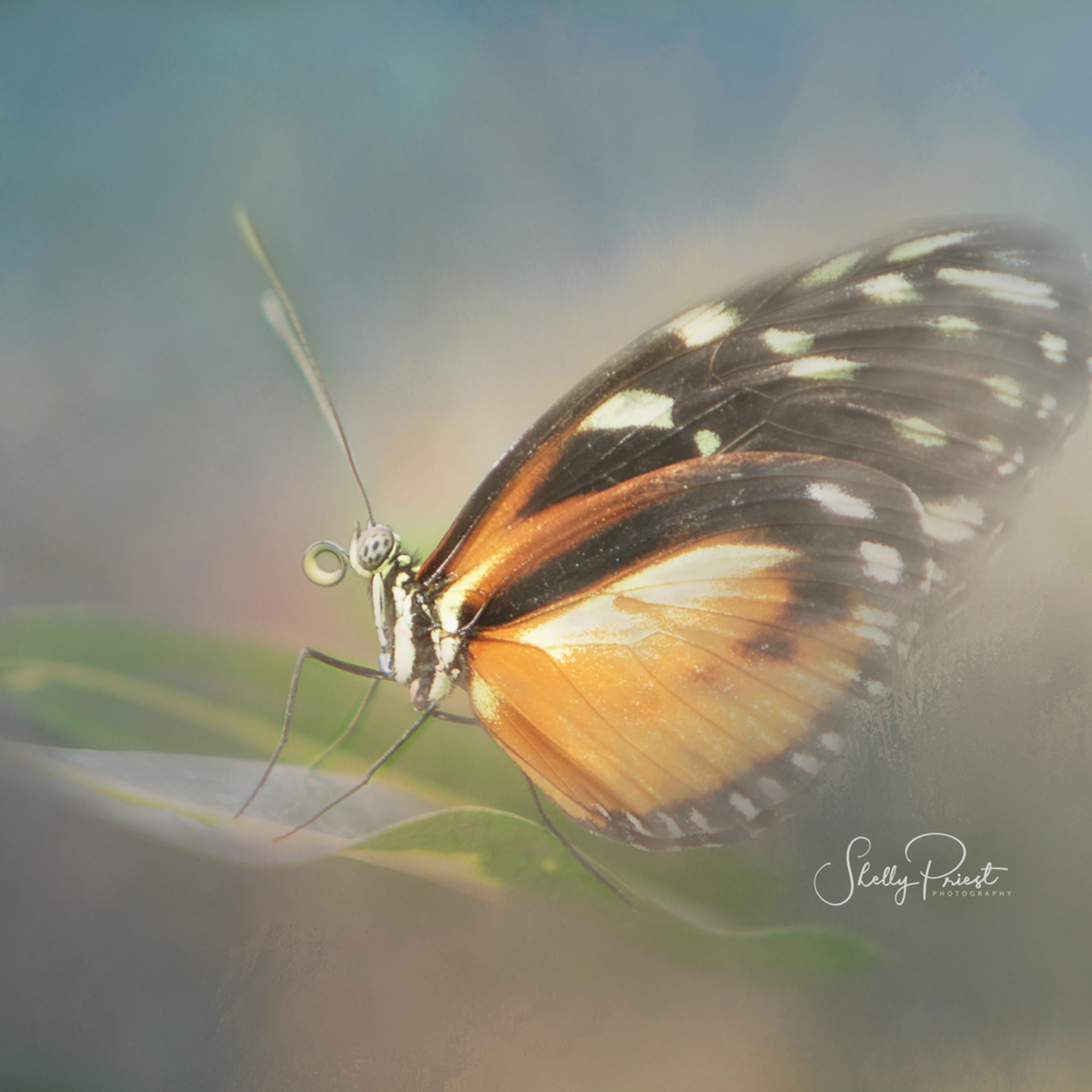 Butterfly 0784 fyfkur