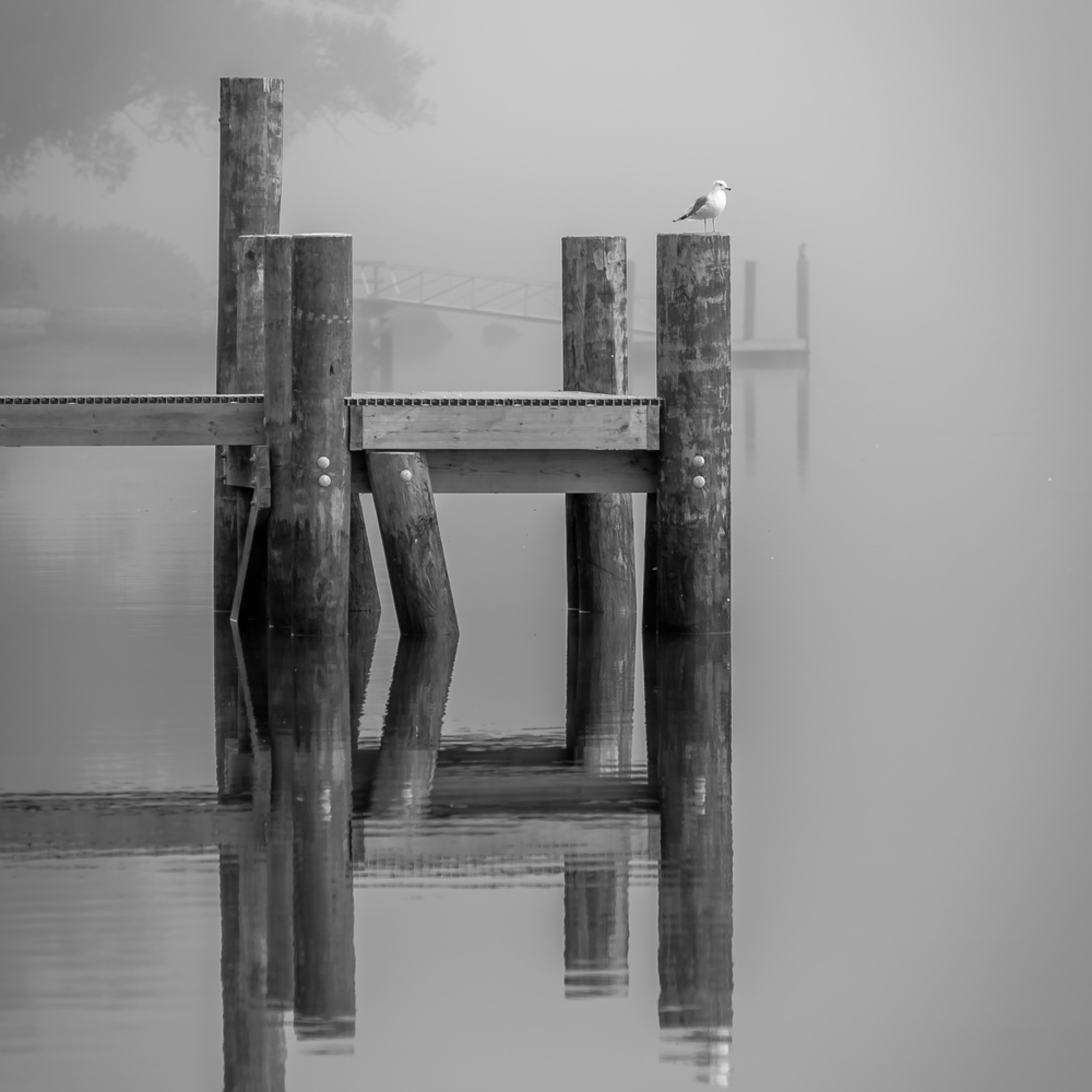 North cove docks in morning fog ncld6k