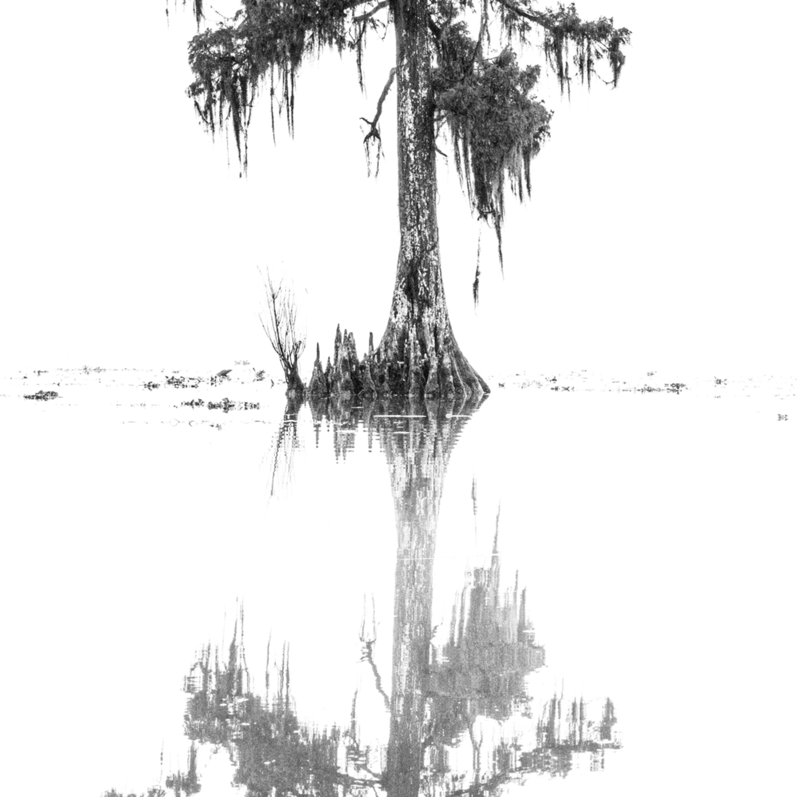 Andy crawford photography maurepas swamp 20171219 2 ioarz7