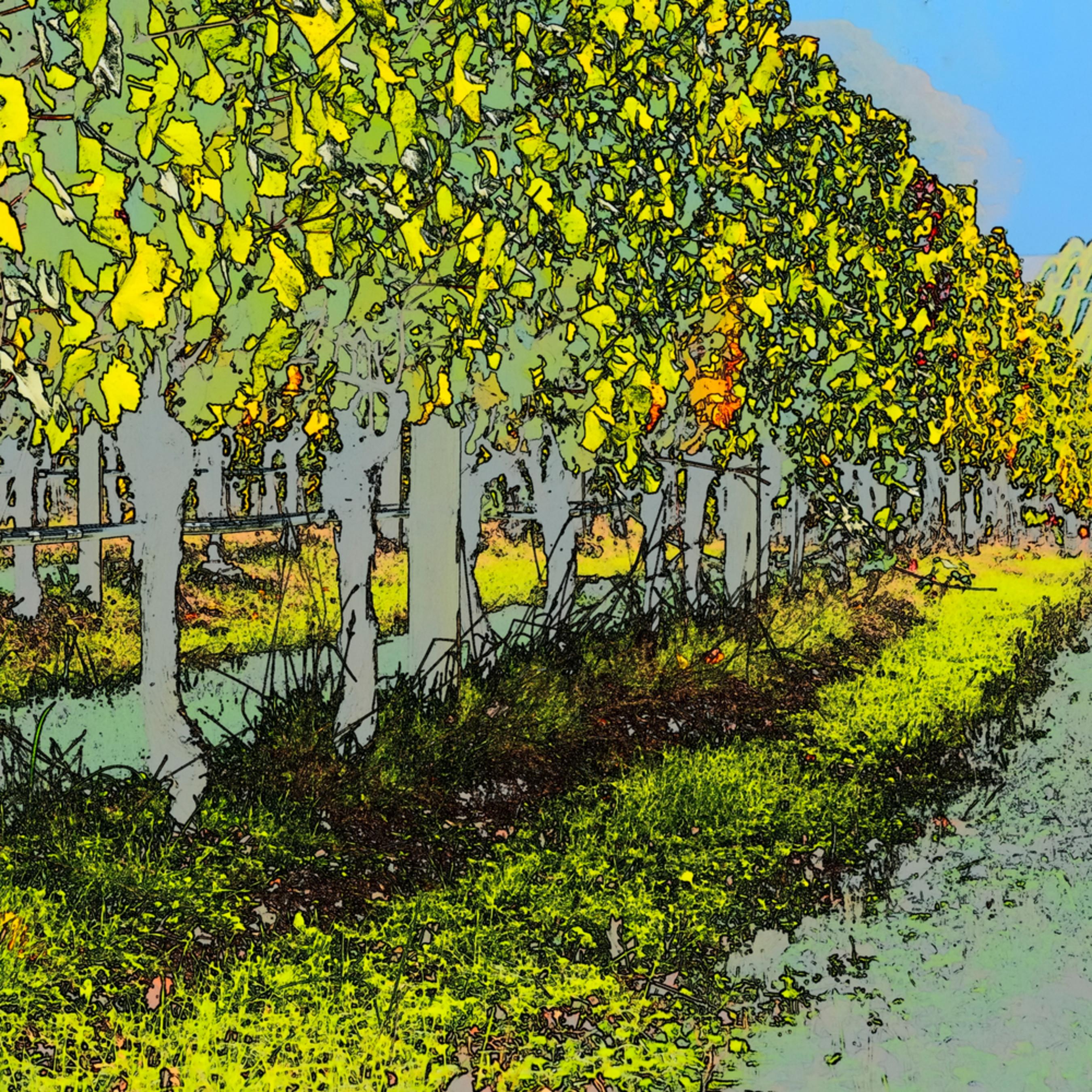 Vineyard lines la13p4