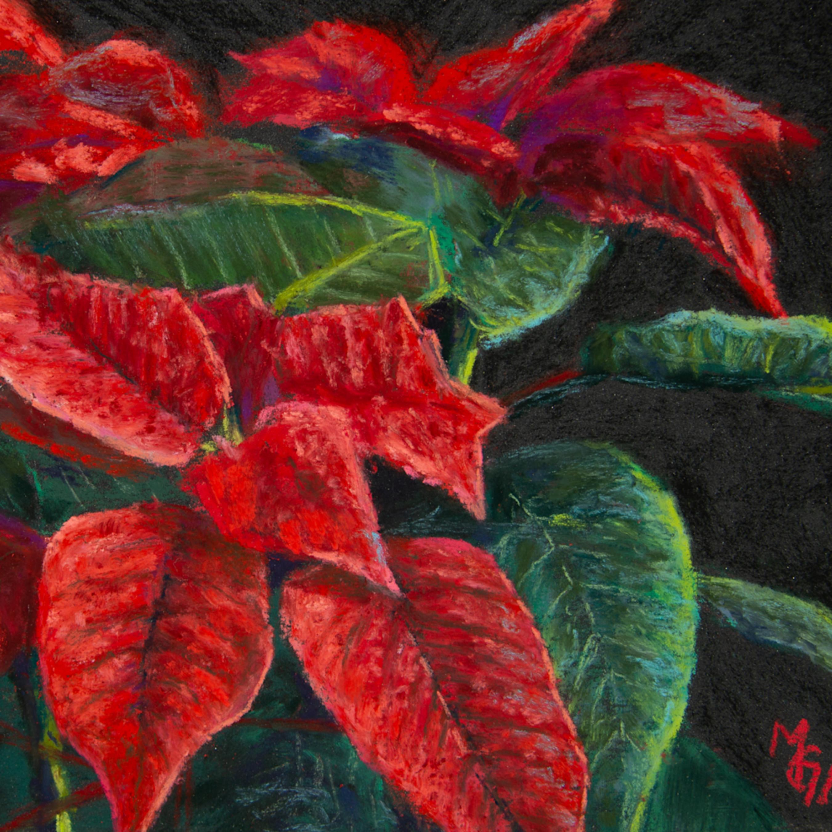 Poinsettias ypecsf