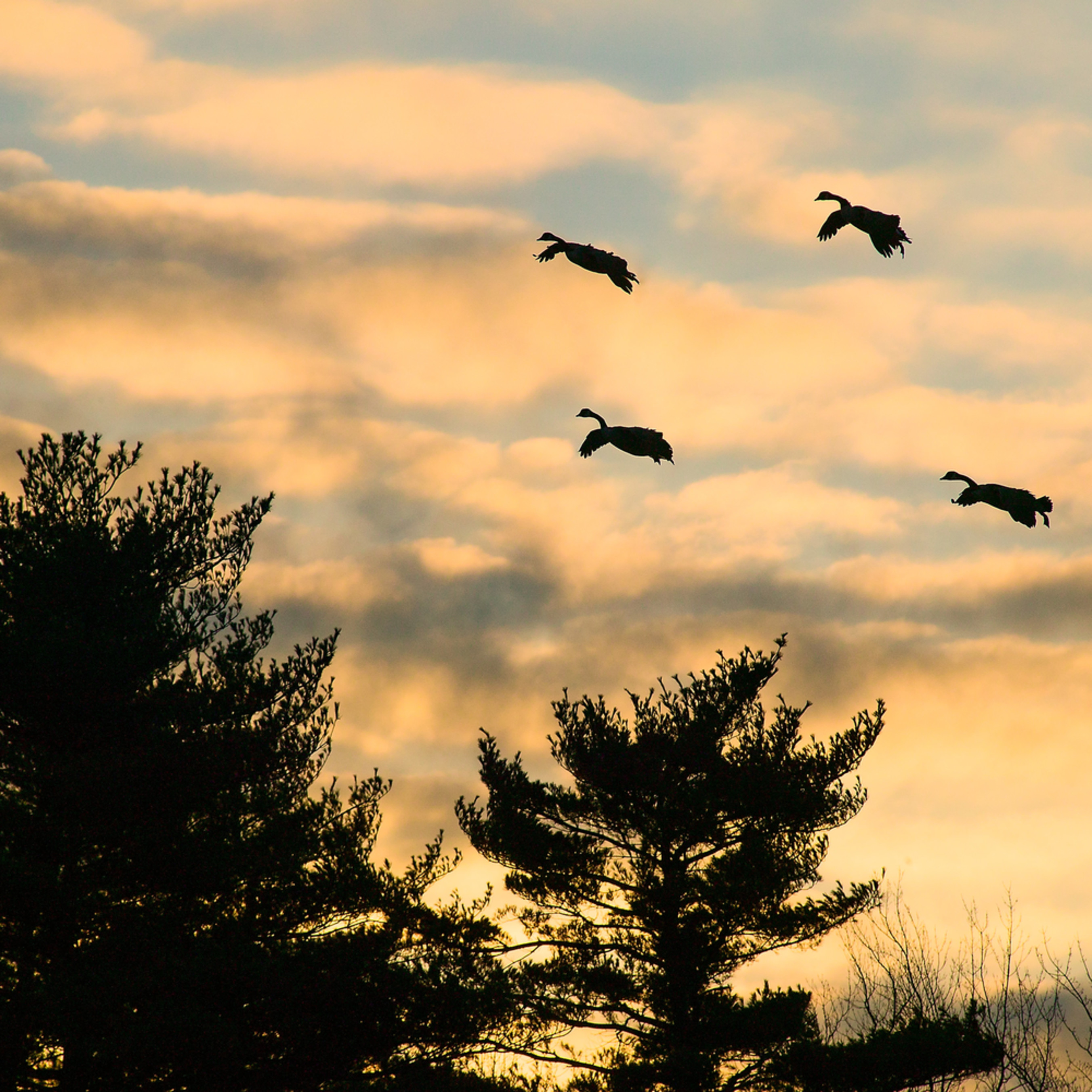 20061212 geese 023 2 pr bamuju