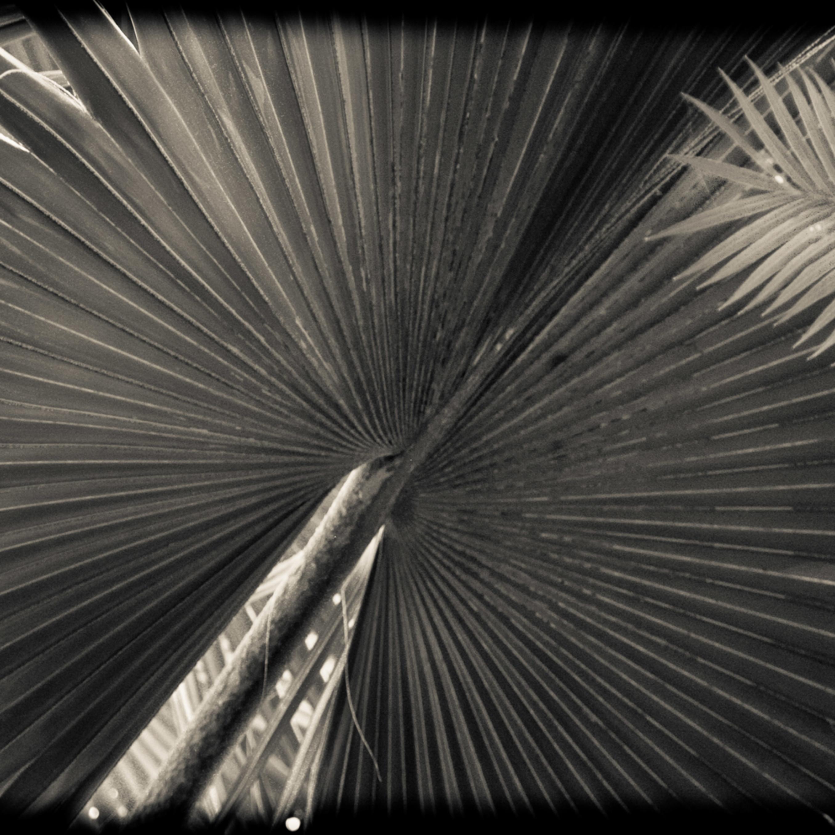 Ferns lyr7mb