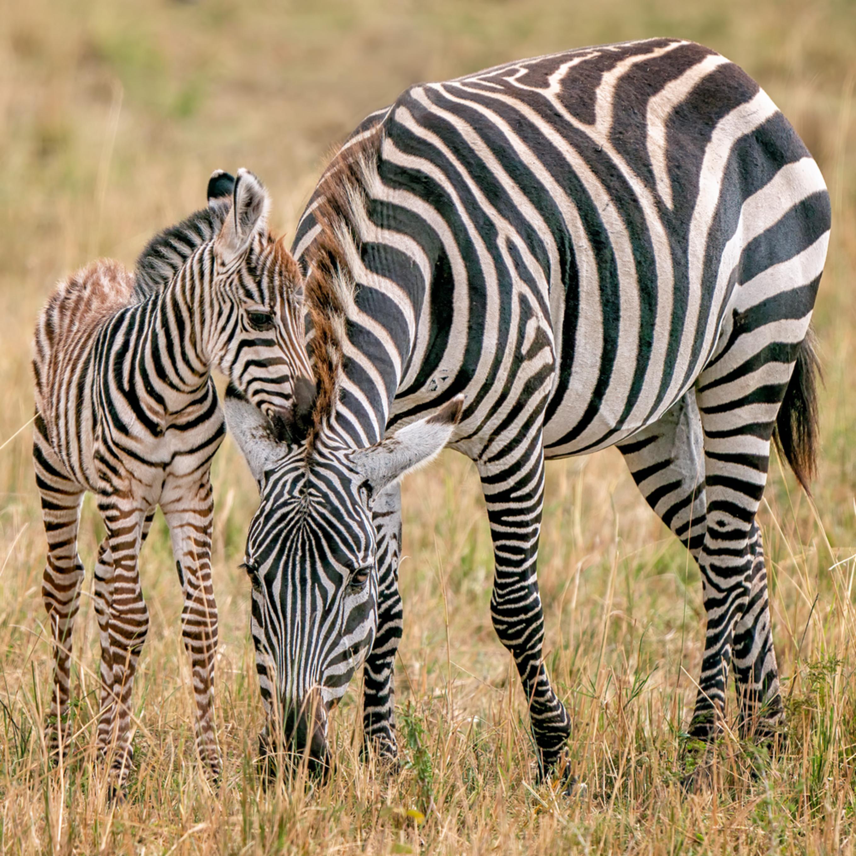Stripes g3eoxy