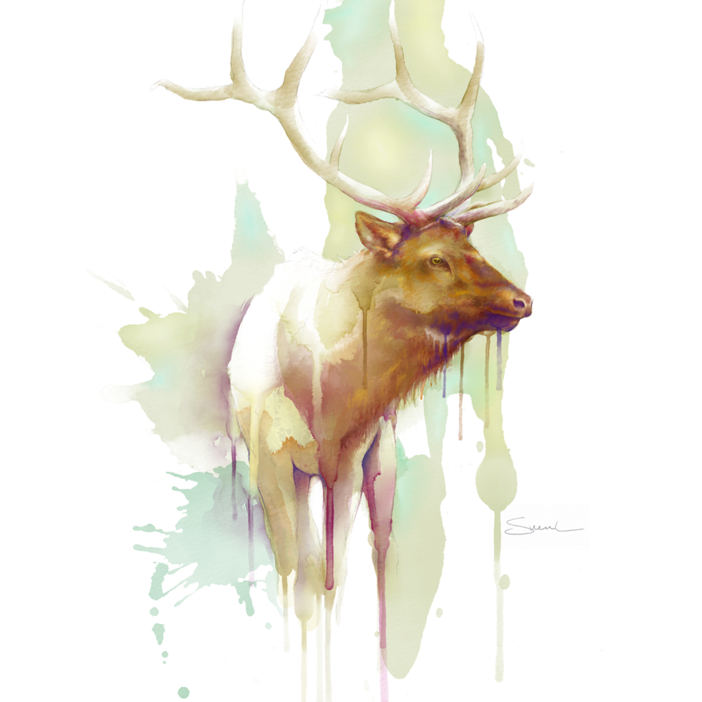 Bull elk watercolor ussgt2