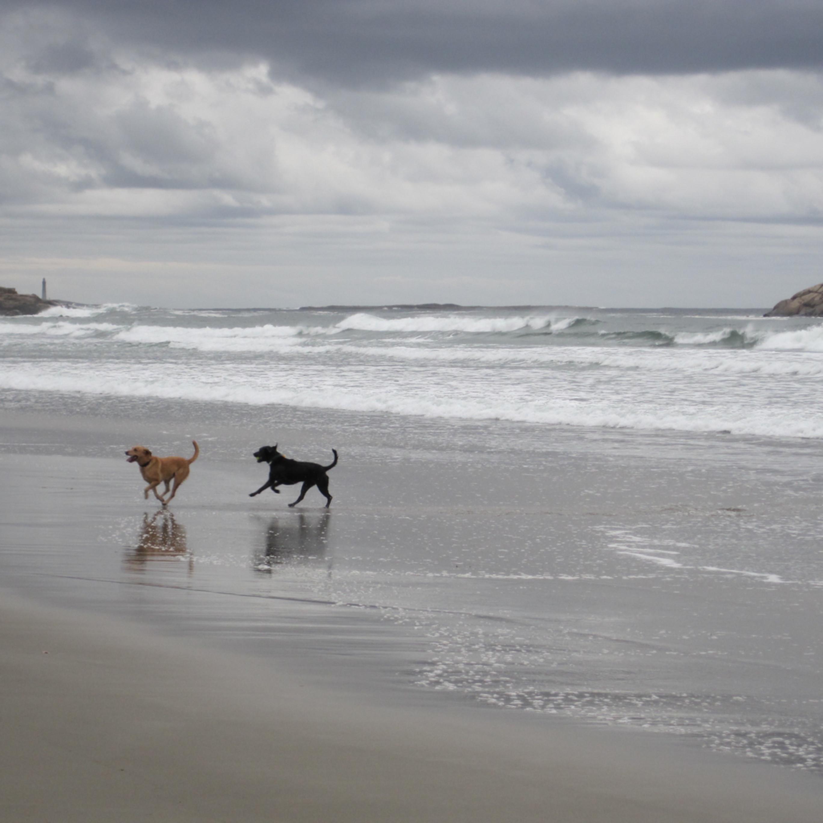 Dogs on the beach a6pj8w