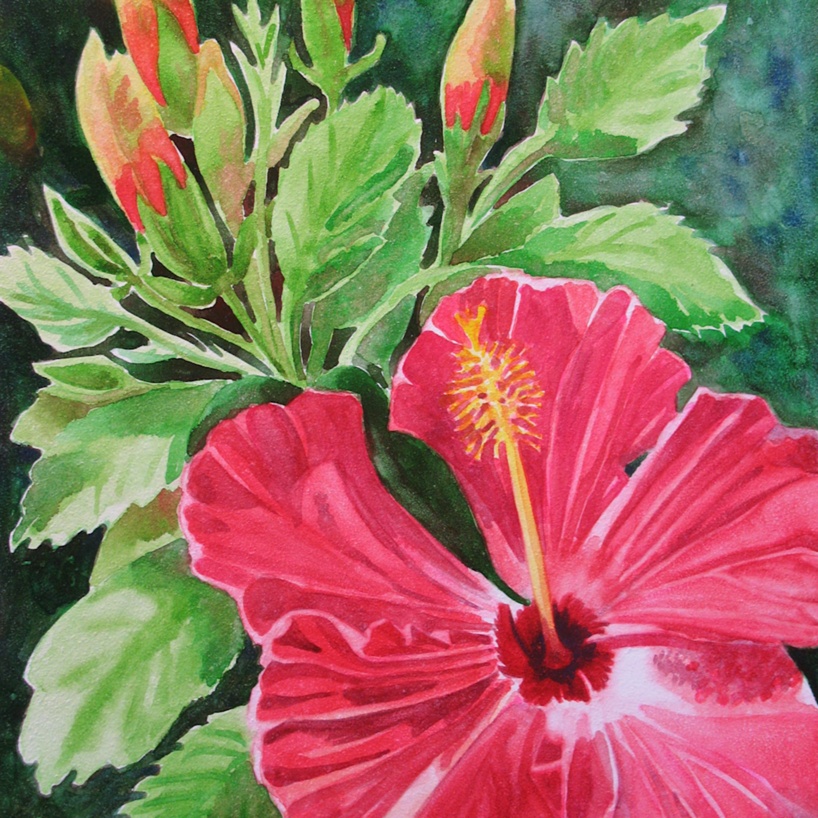 Hibiscus 1 rxqytv