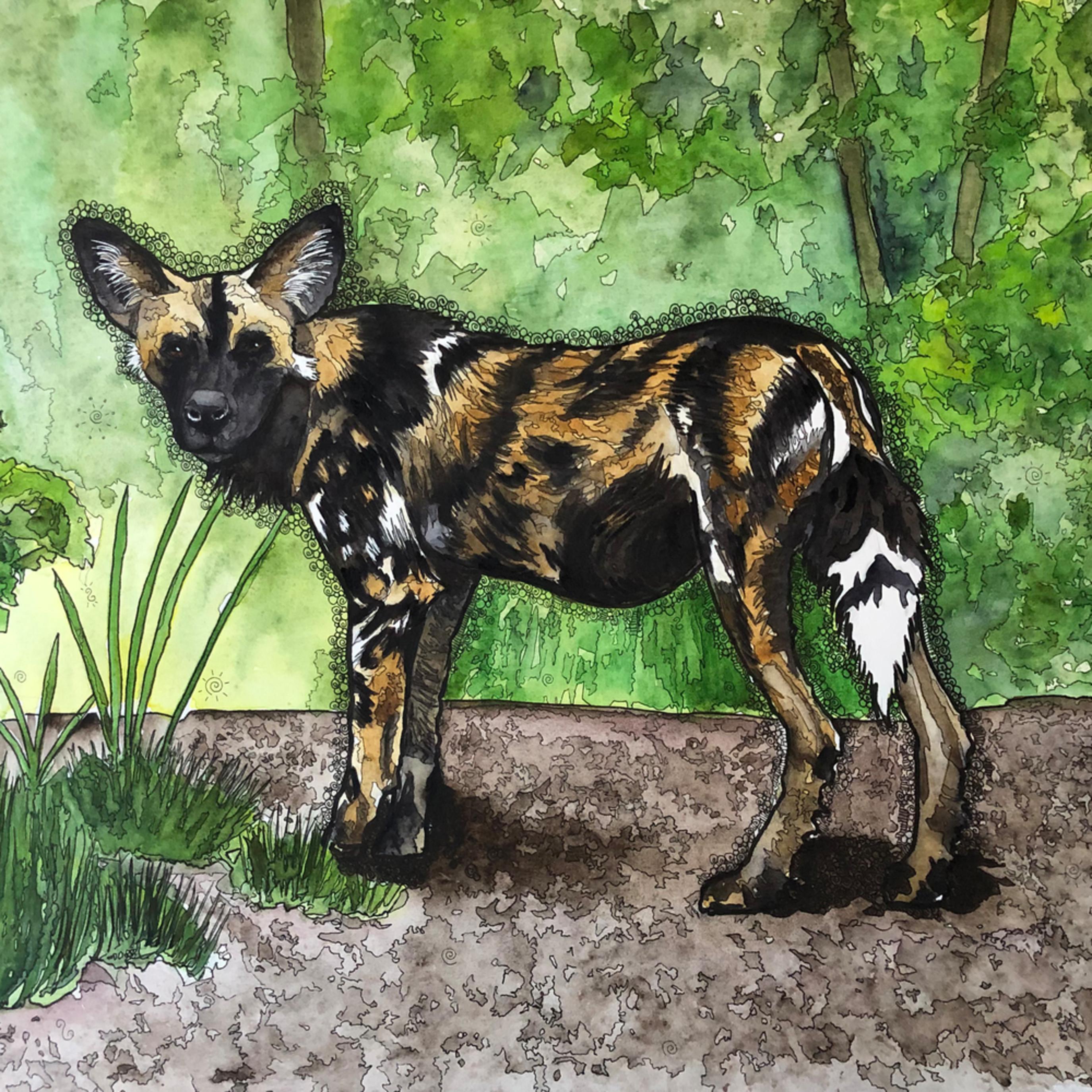 Africanpainteddog grjei0
