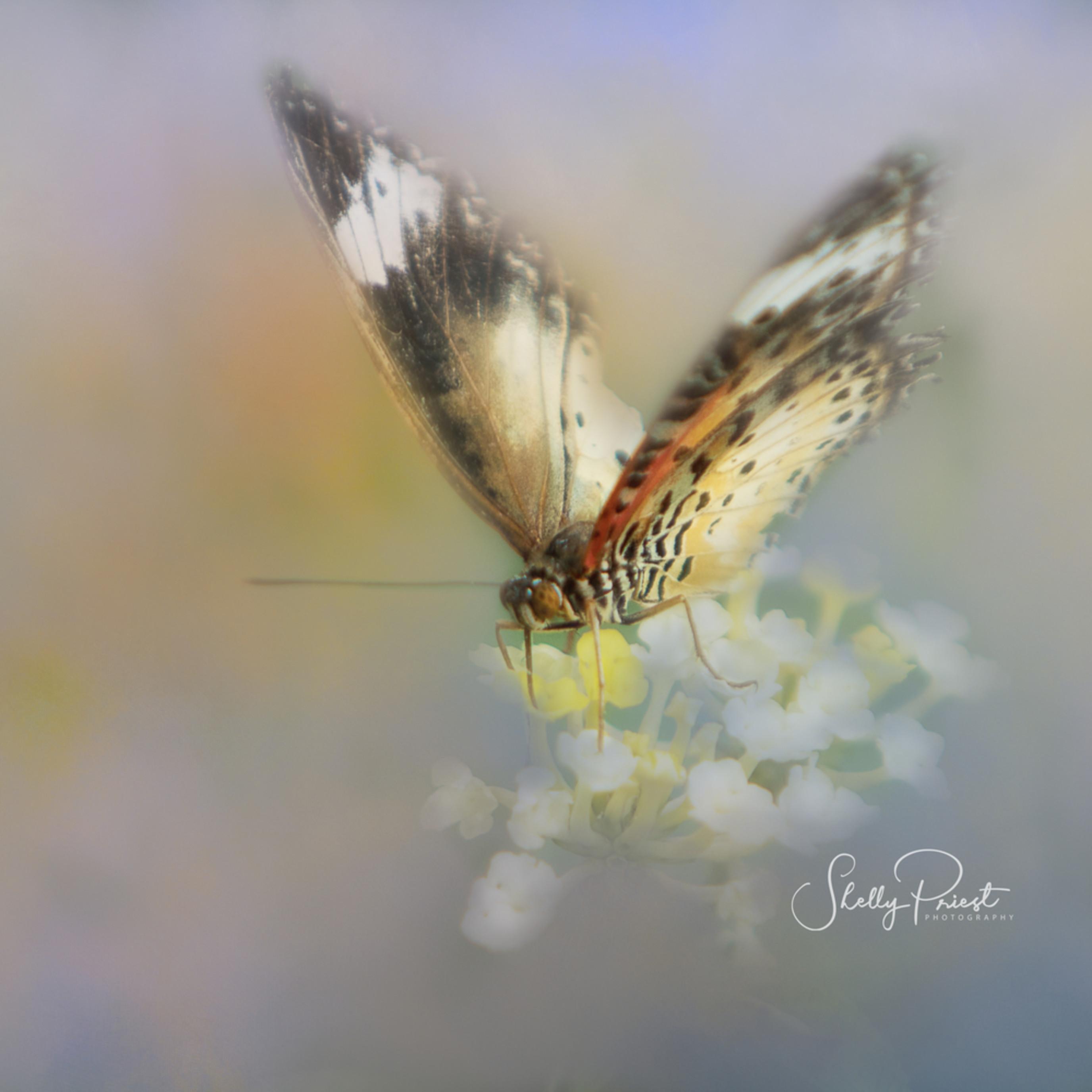 Butterfly 0811 j99qyk