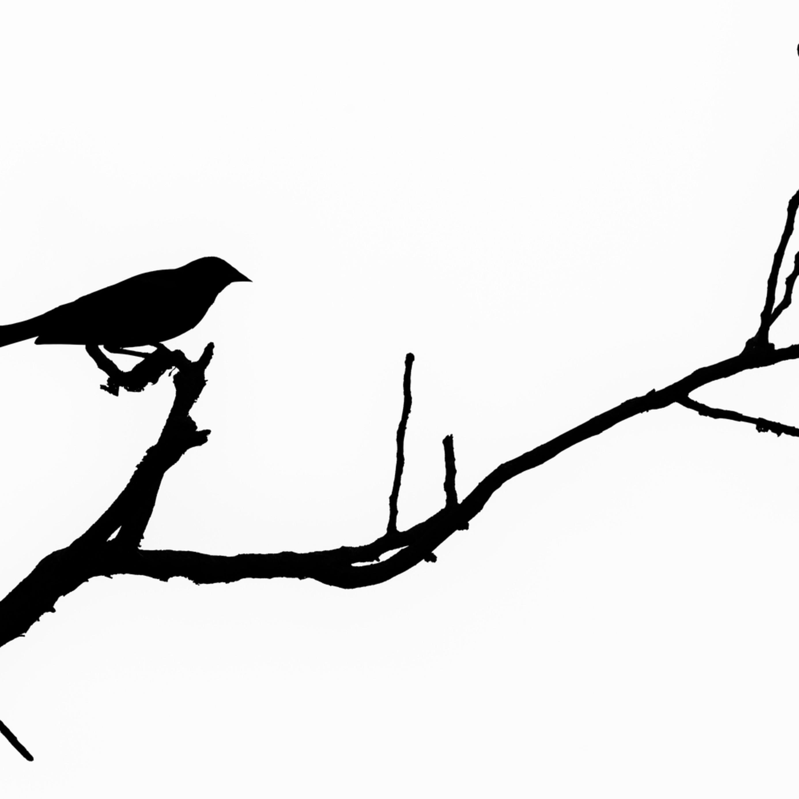 Bird silhouette viii bs5hzv