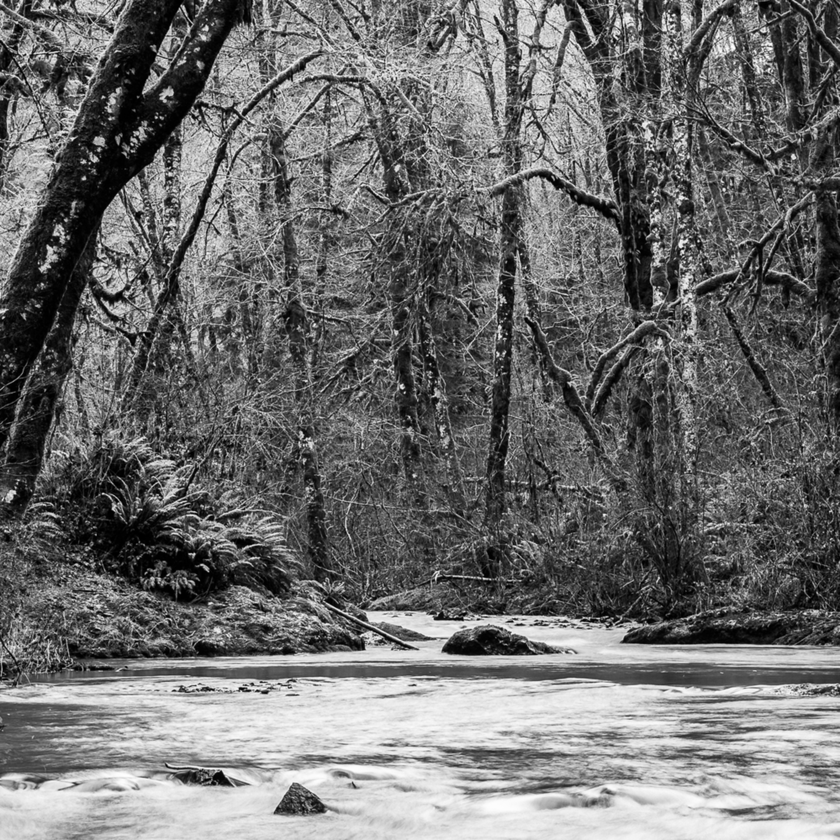 Forest along cedar creek capital state forest washington 2015 qsjymv
